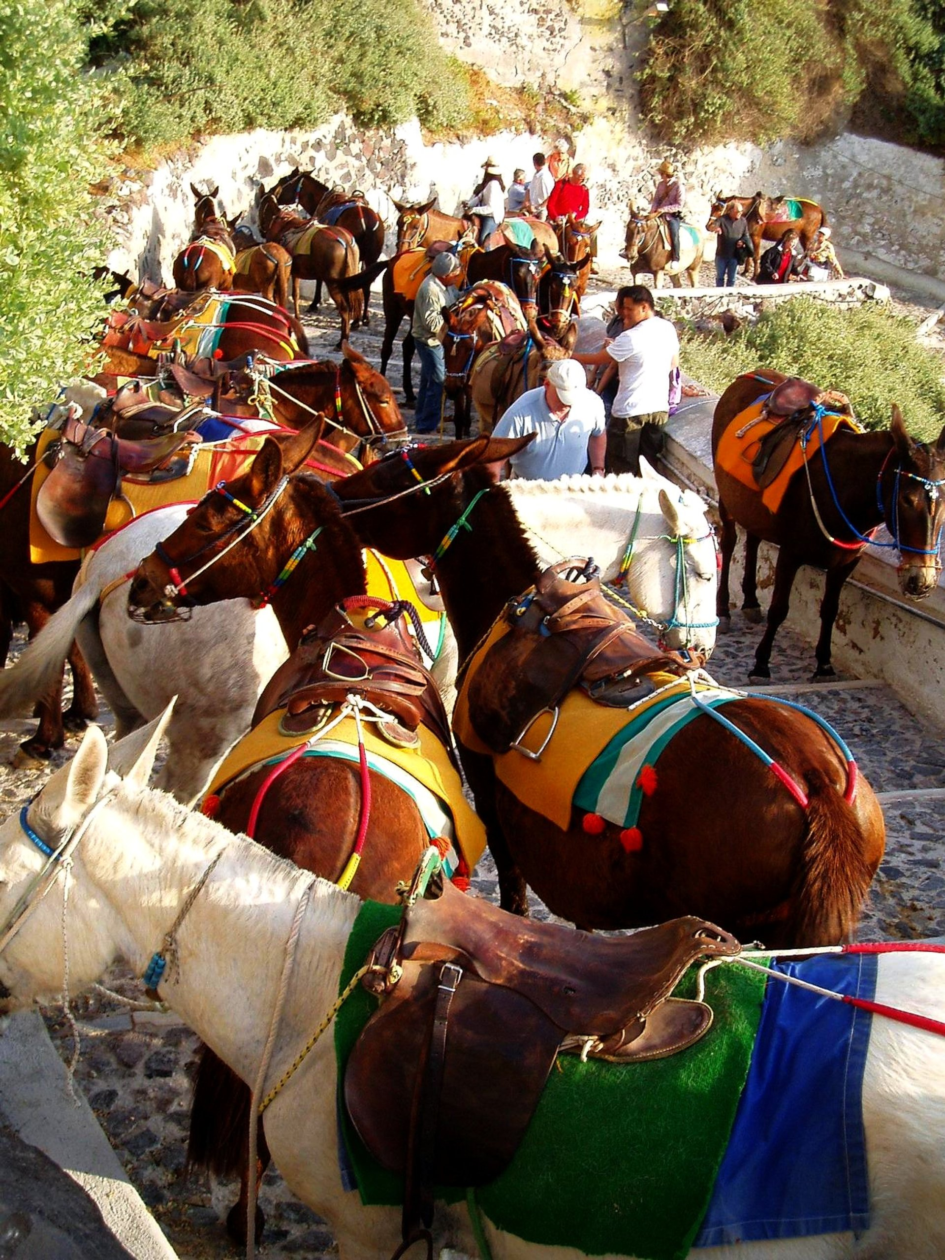 Donkey Ride in Santorini - Best Season 2020