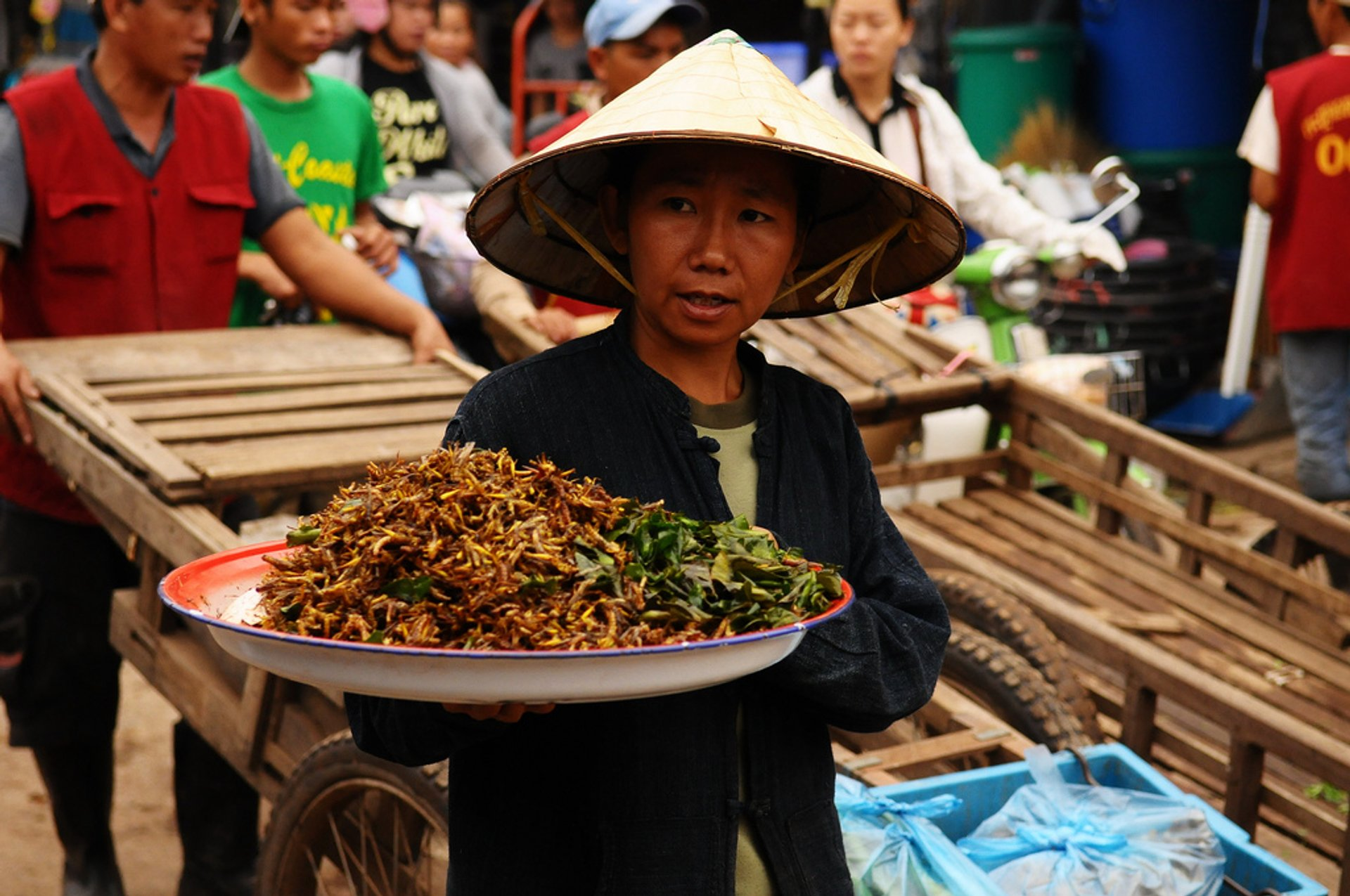 Best time for Edible Insects in Laos 2020