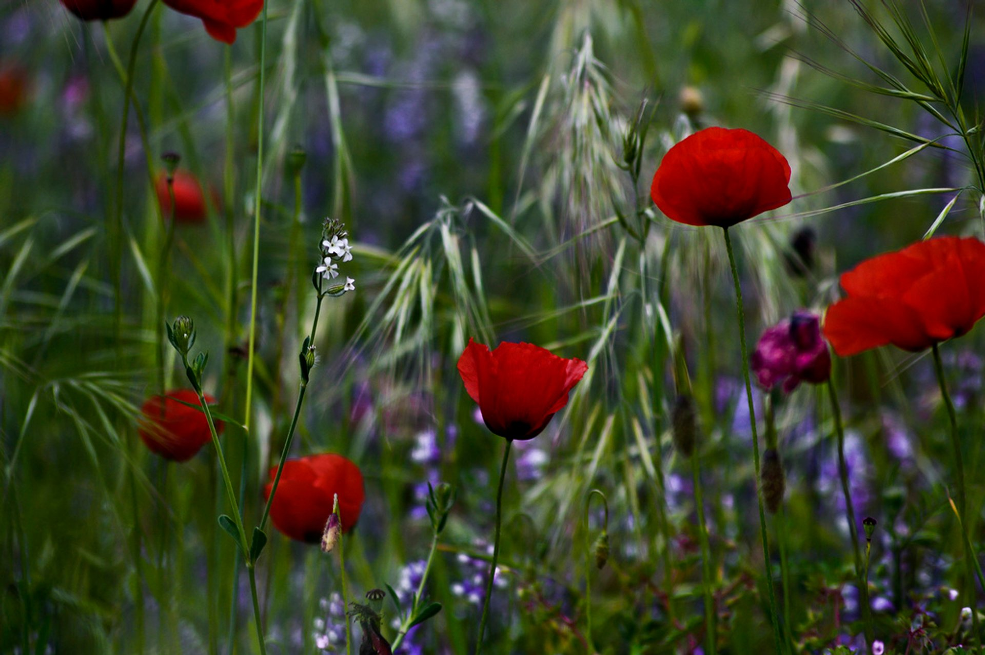 Best time for Wildflowers in Bloom in Corsica 2020