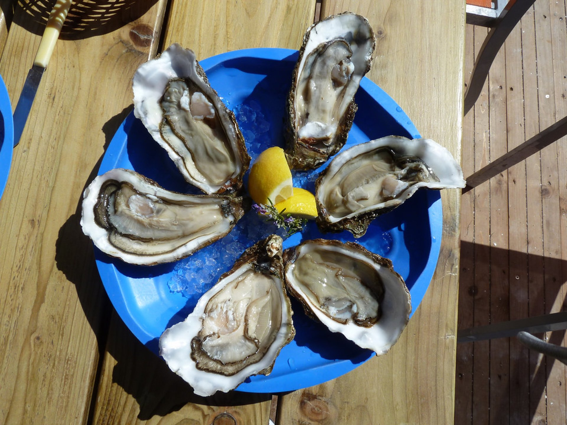 Oyster Season in Provence & French Riviera 2020 - Best Time