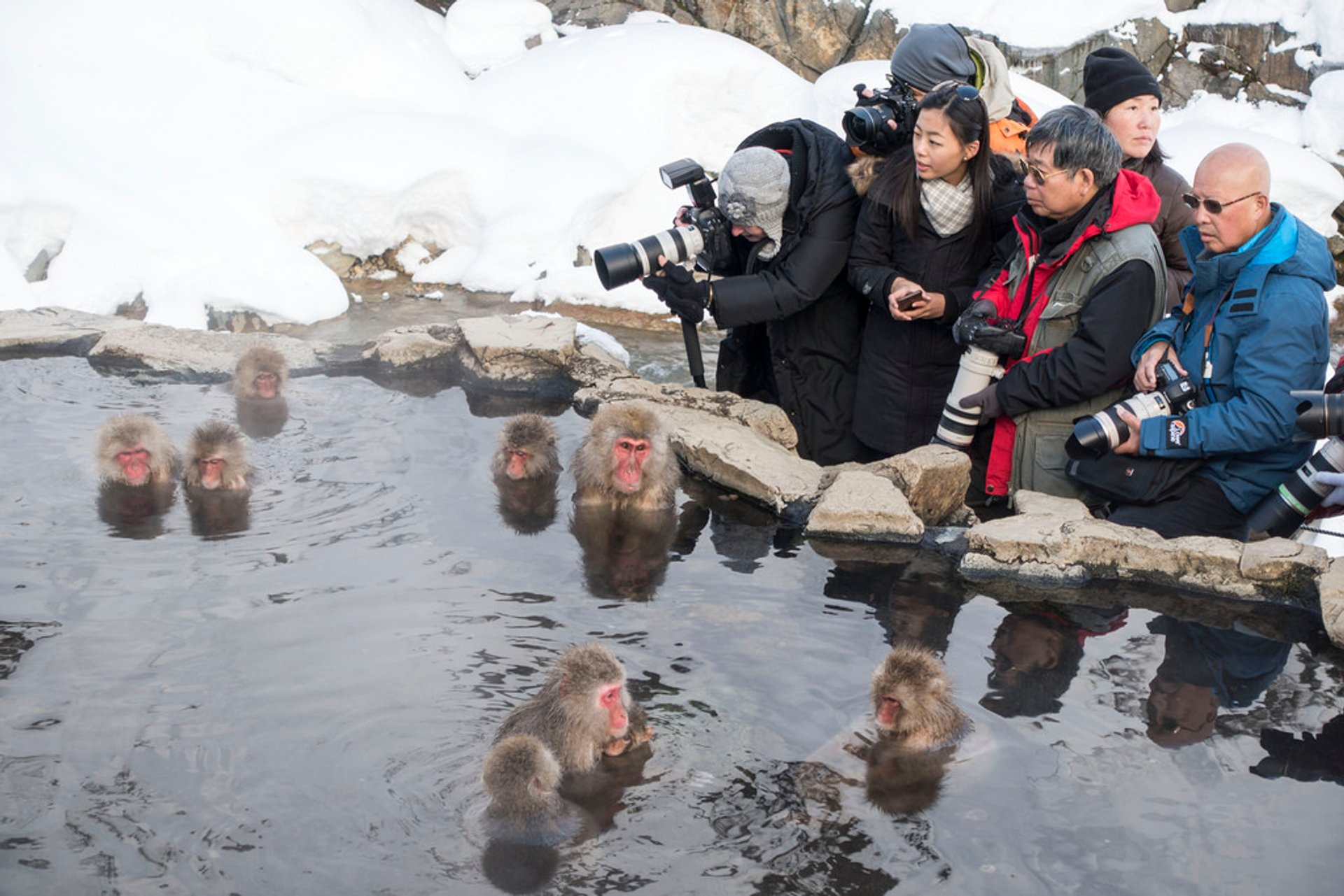 Best time for Snow Monkeys in Japan 2020