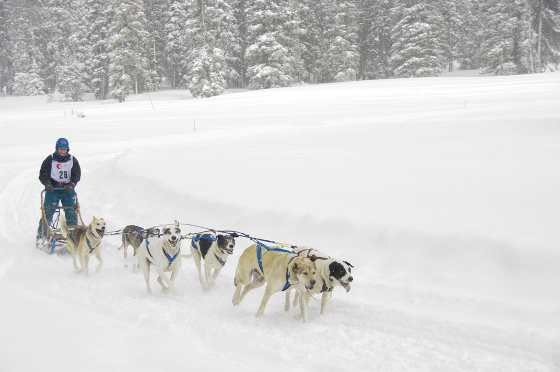 Dog Sledding & Snow Tubing in Colorado 2019 - Best Time
