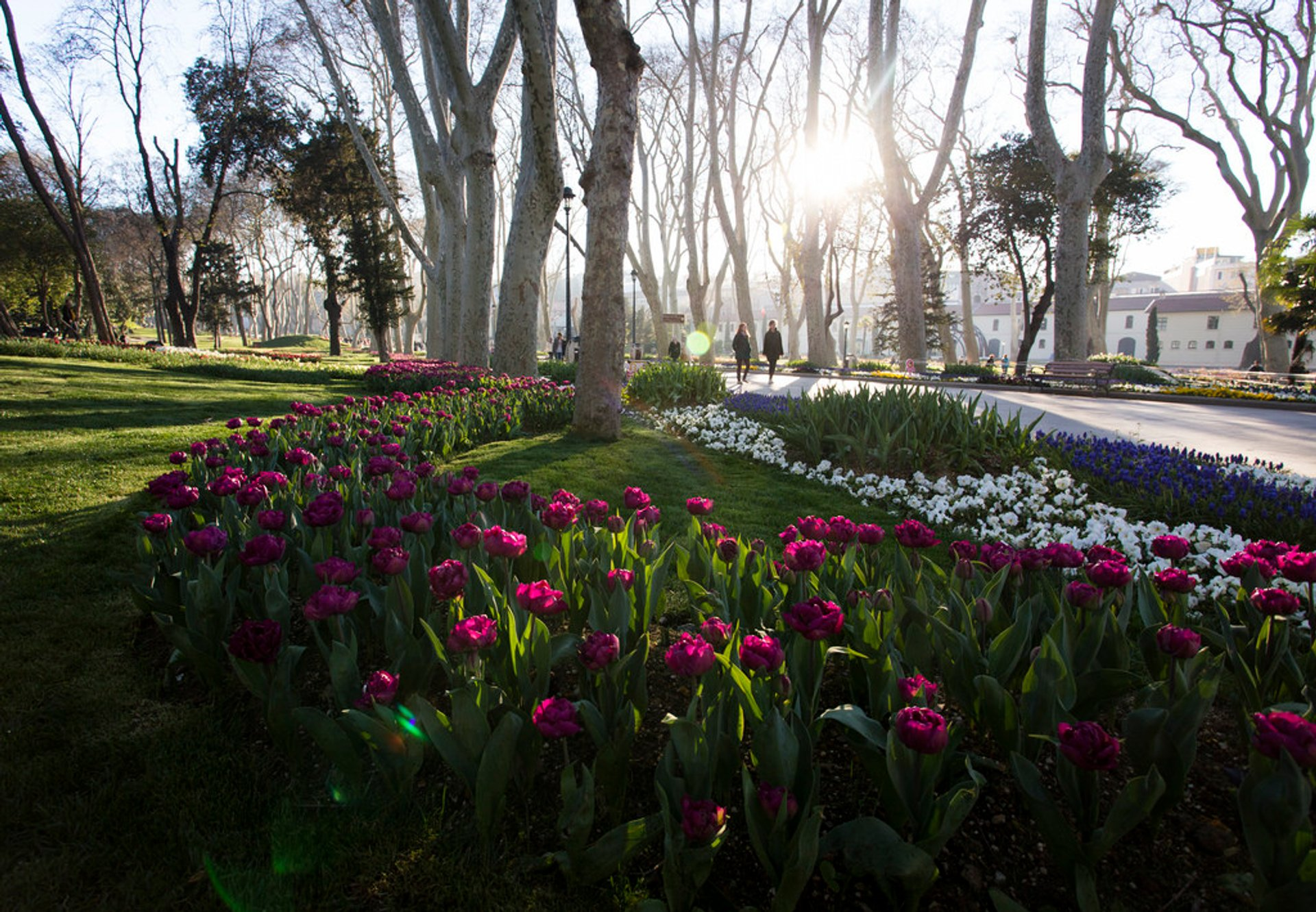 Tulips in Istanbul 2019 - Best Time