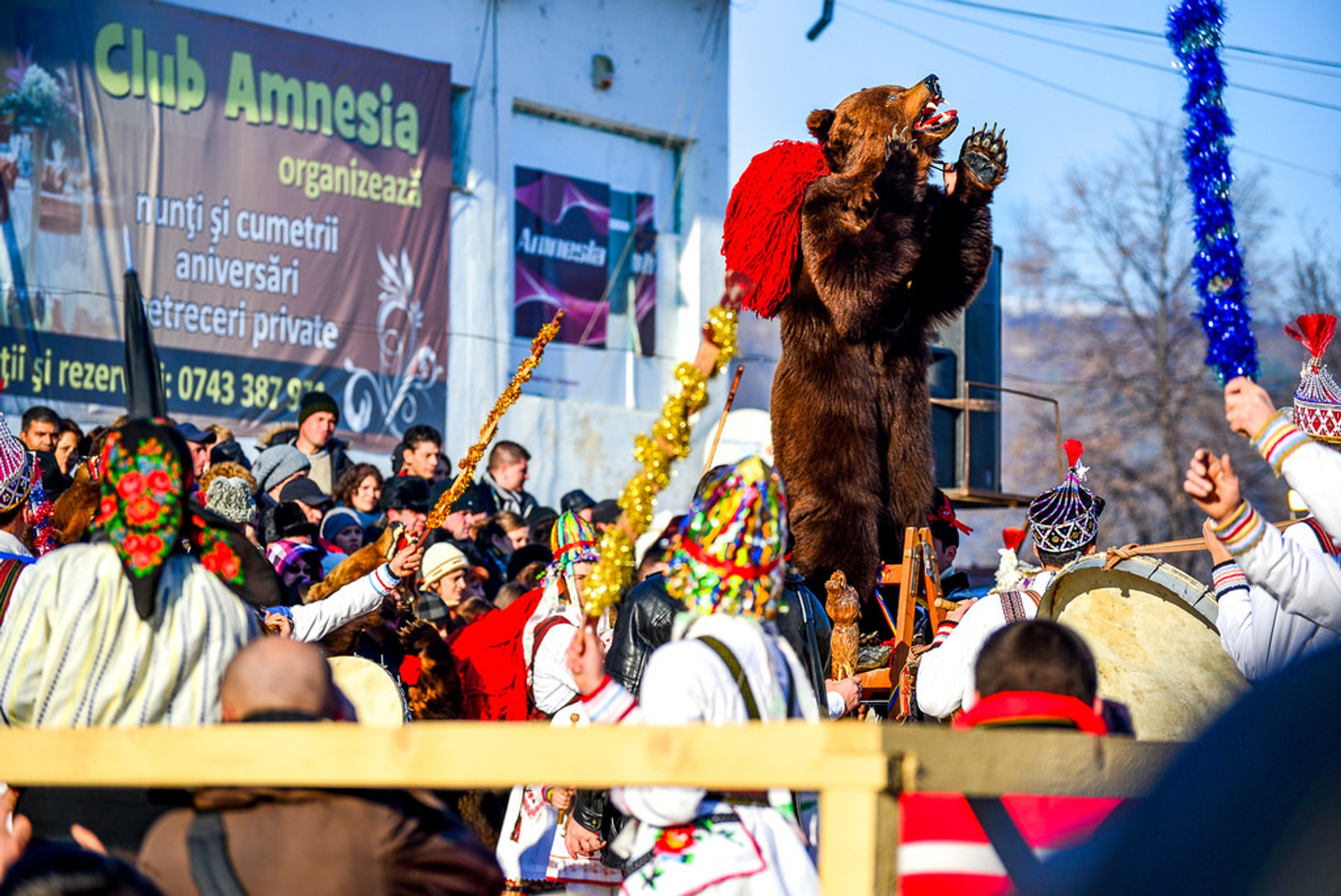 Best time for New Year Bears in Romania 2019