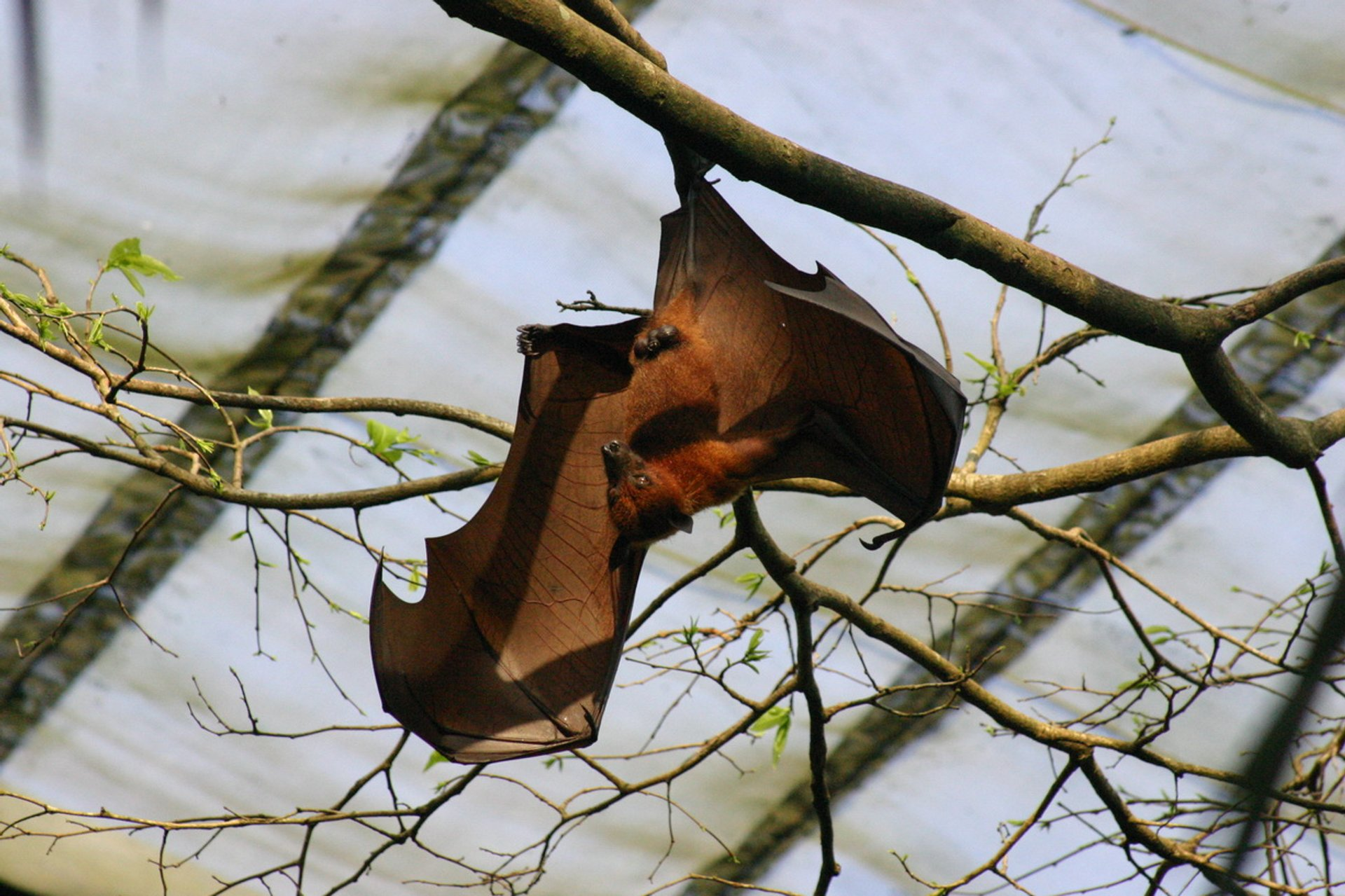 The Flying Fox in Singapore - Best Season