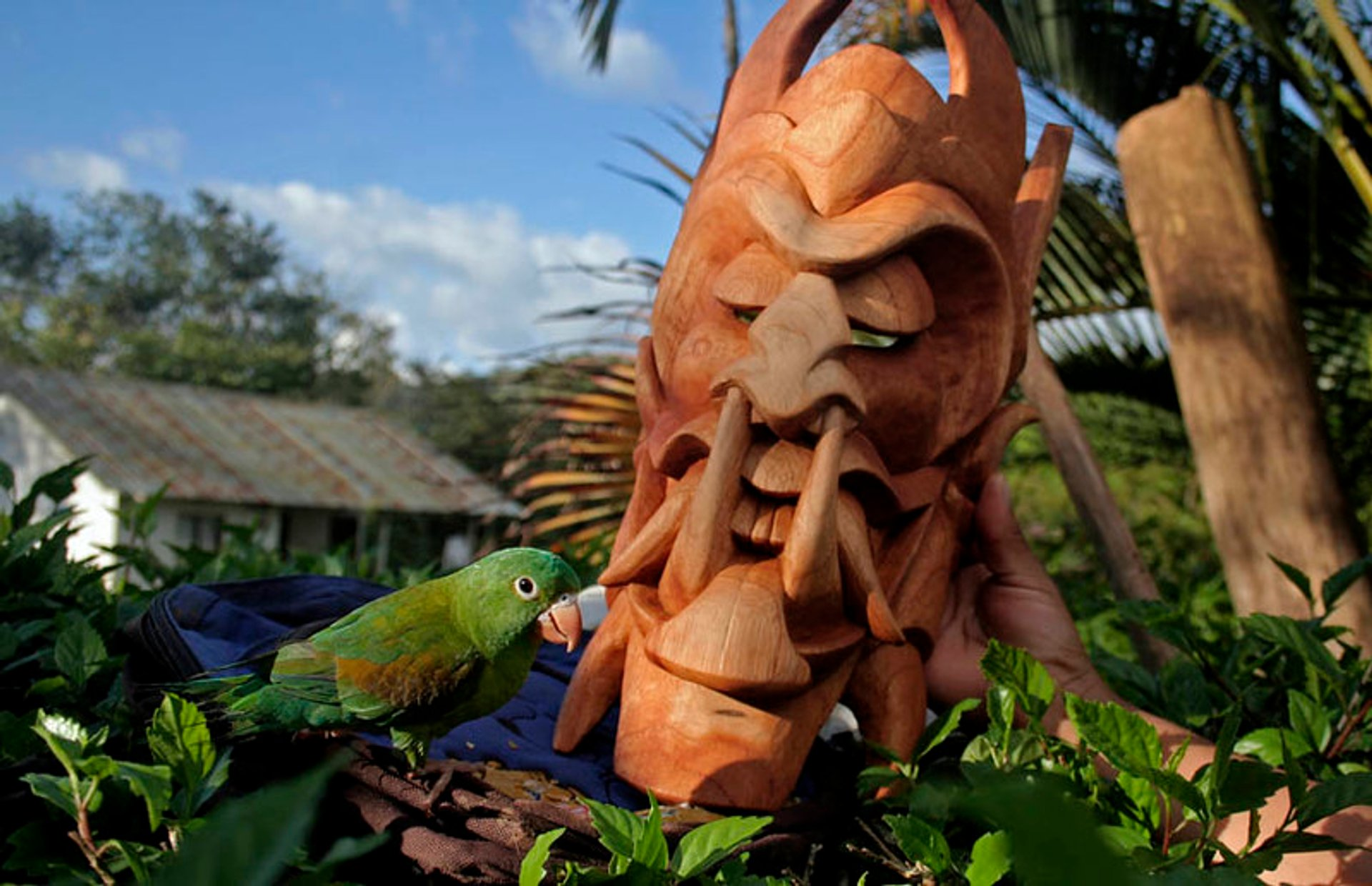 Best time for Festival of the Diablitos in Costa Rica 2020