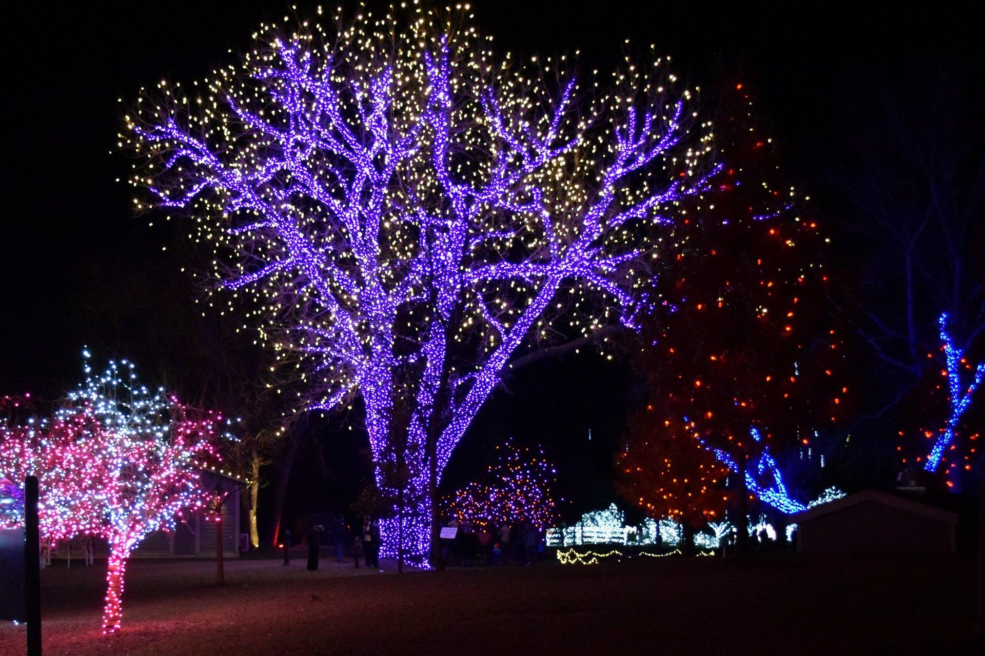 A Hudson Christmas in Denver - Best Season 2020