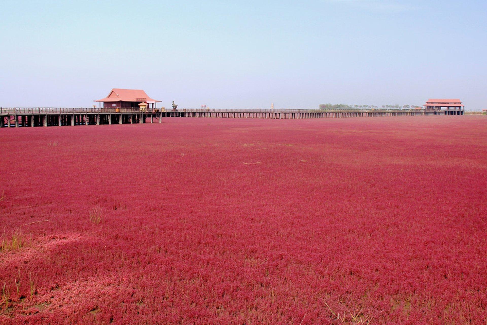 Panjin Red Beach in China - Best Season