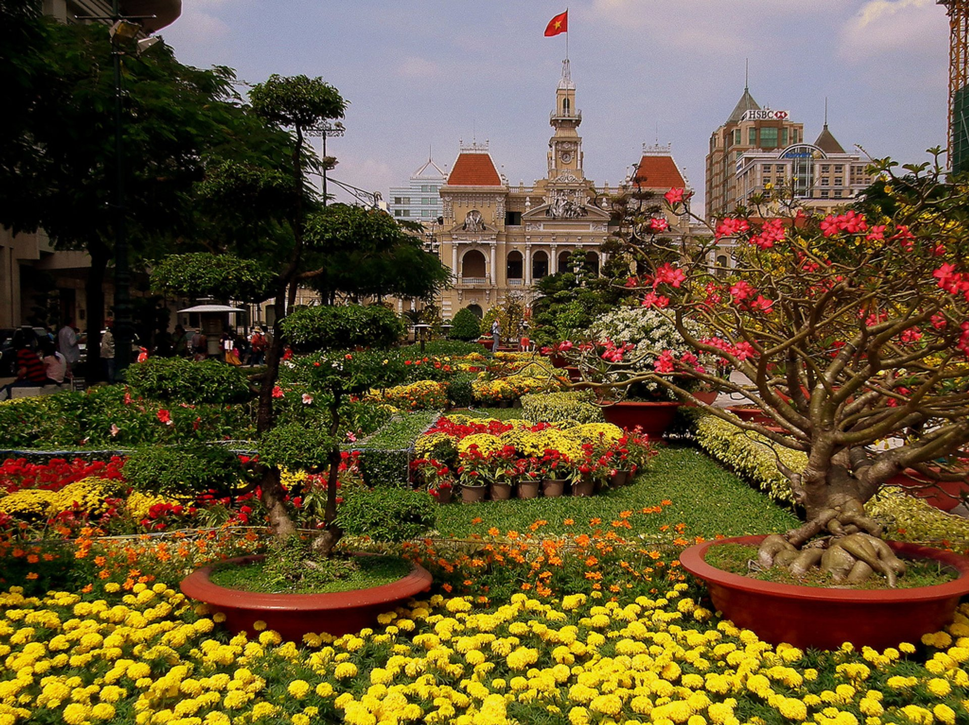 Plants for Tet in Vietnam - Best Time