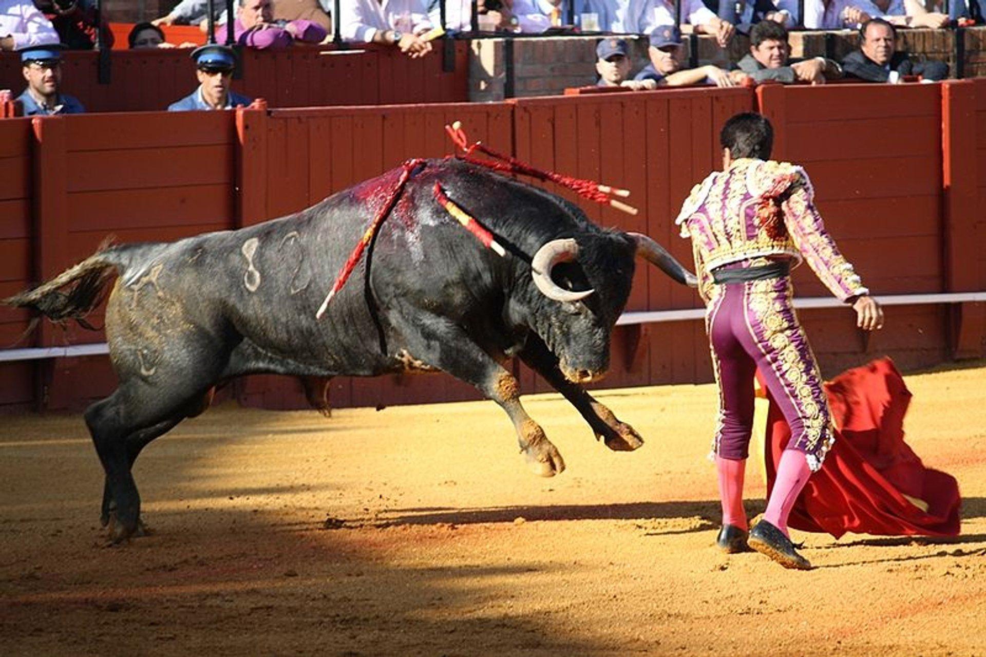 Bullfighting at La Maestranza in Seville - Best Season 2020