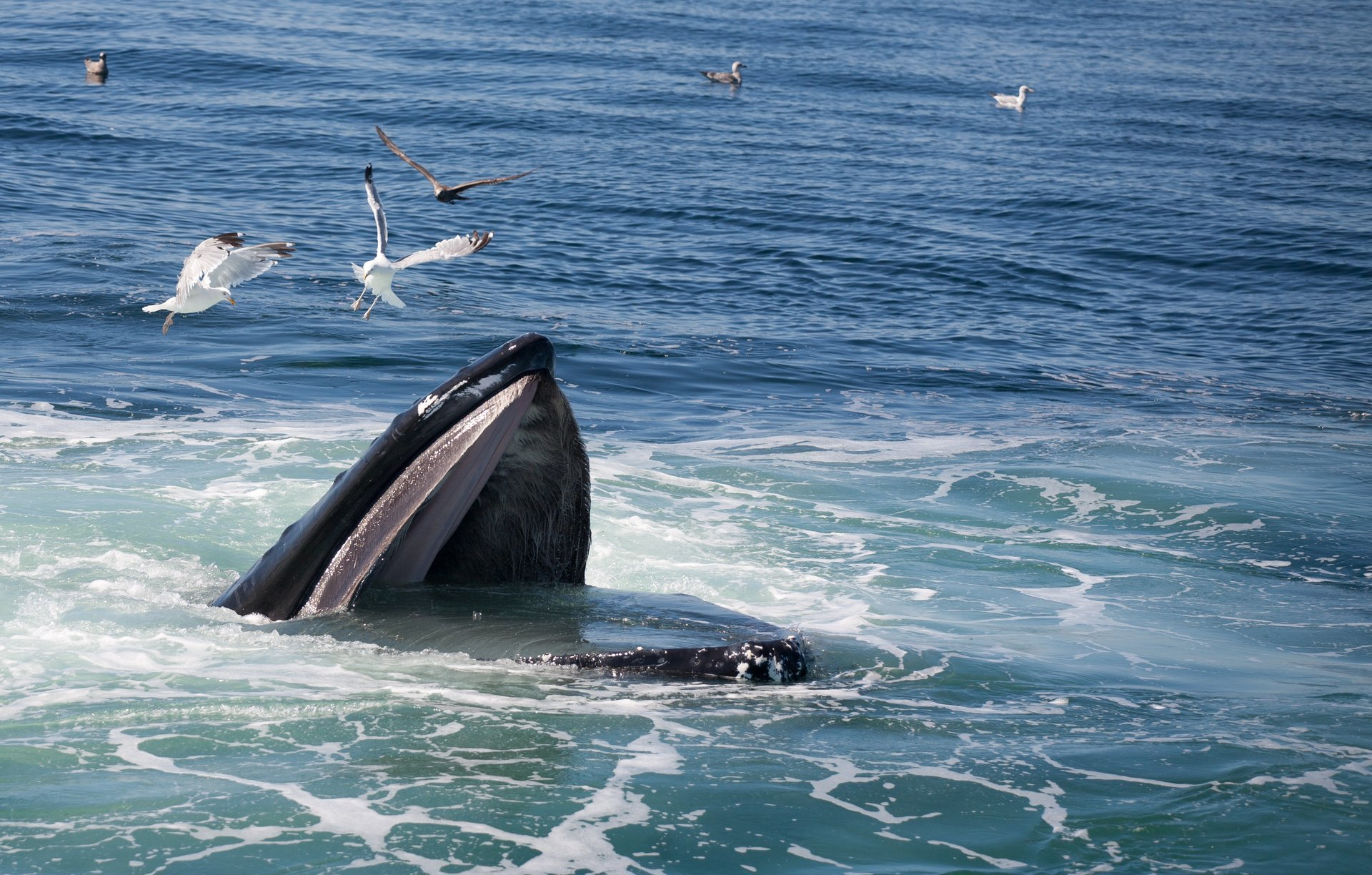 Best time to see Whale Watching in Massachusetts 2020