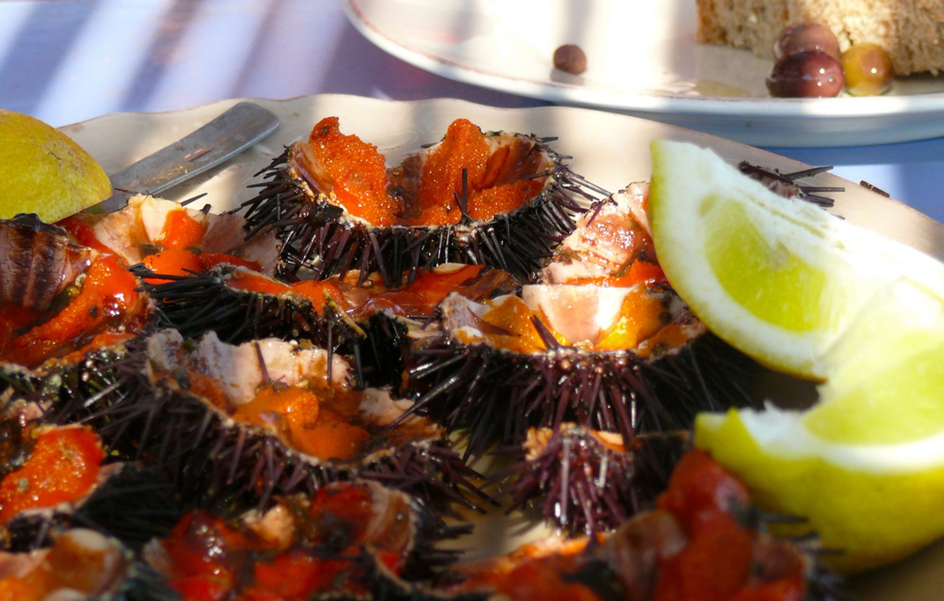 Sea Urchins in Portugal - Best Time