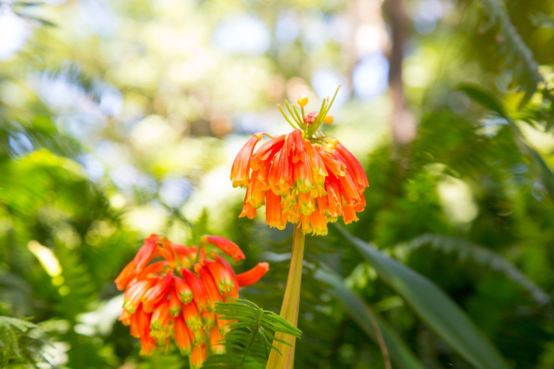 Best time to see Hakgala Botanical Gardens in Sri Lanka 2020