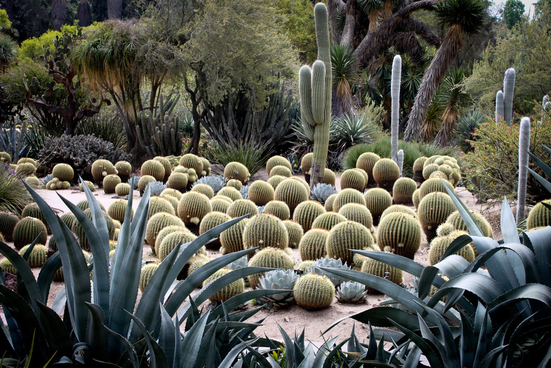 Huntington Library - Desert Garden 2019