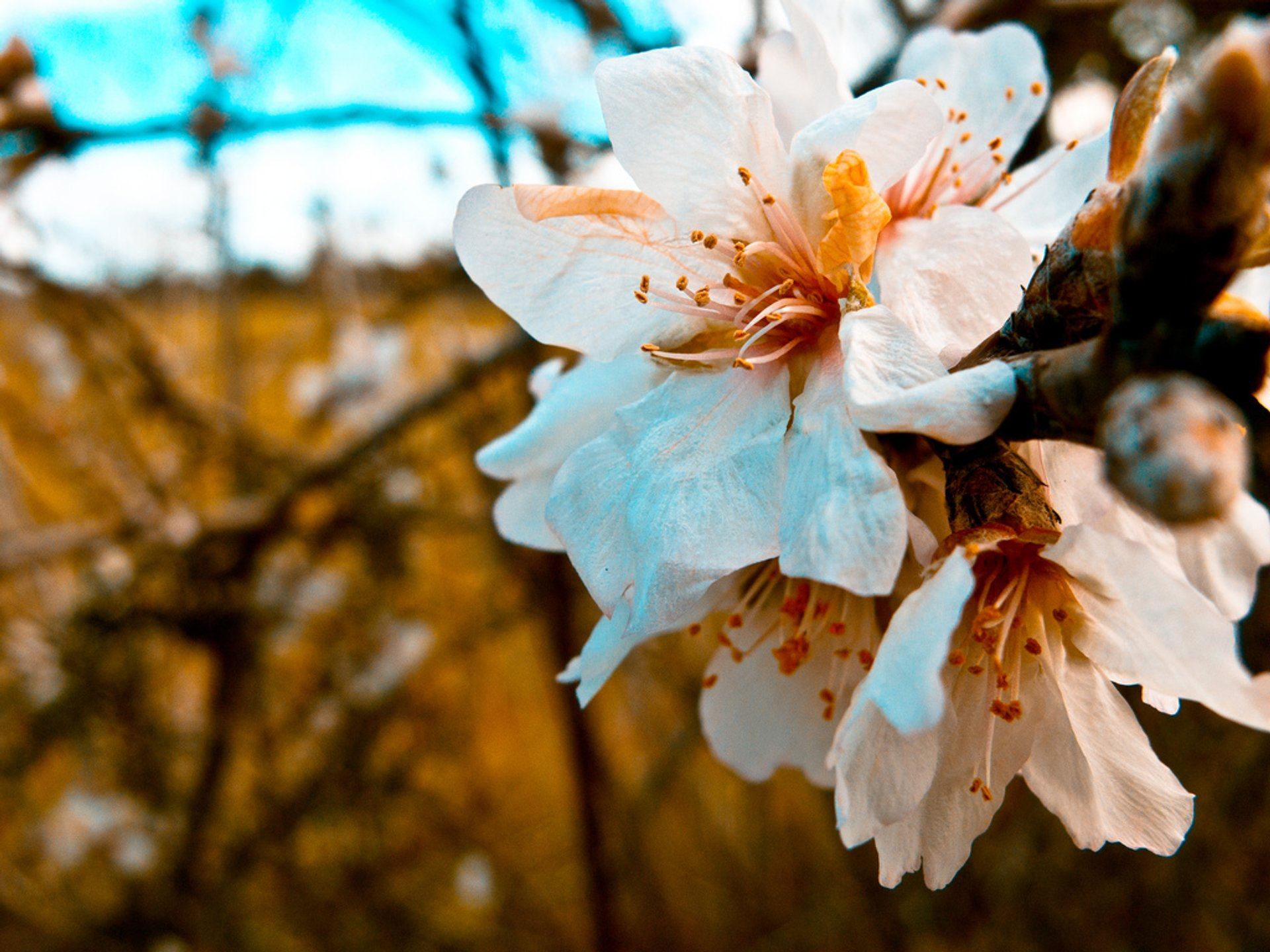 Almond Trees Blossom in Mallorca 2020 - Best Time