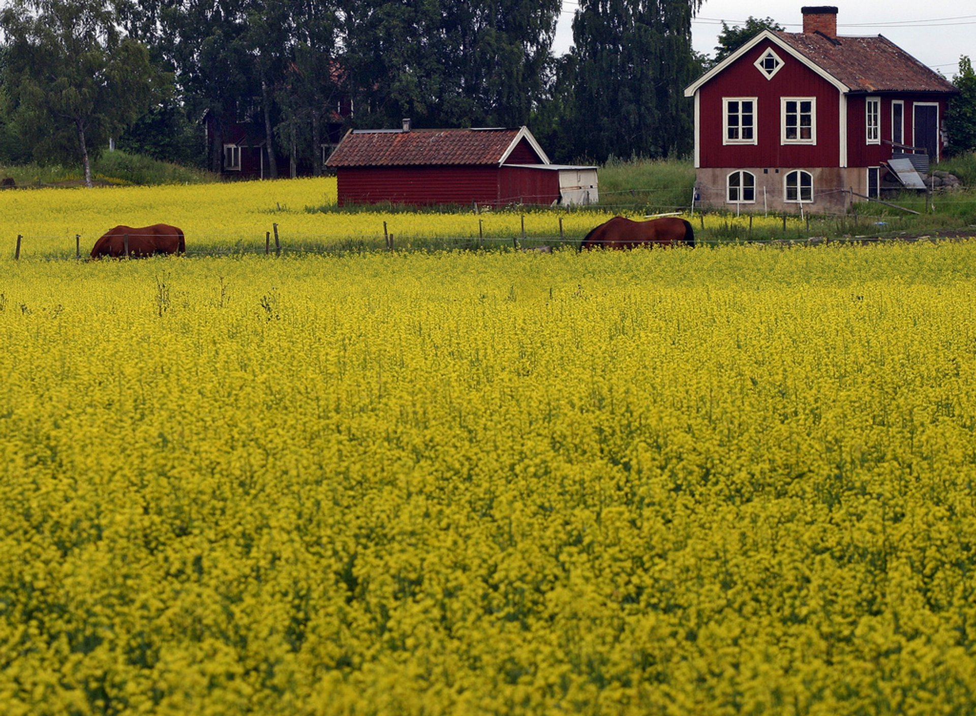 Skåne Yellow Spring in Sweden - Best Season 2019