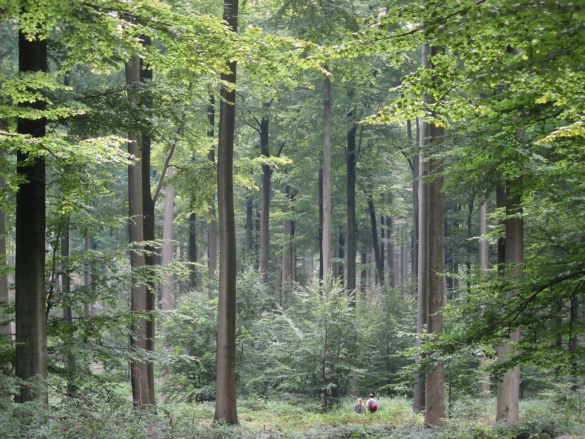 Sonian Forest (Zoniënwoud) in Brussels 2020 - Best Time