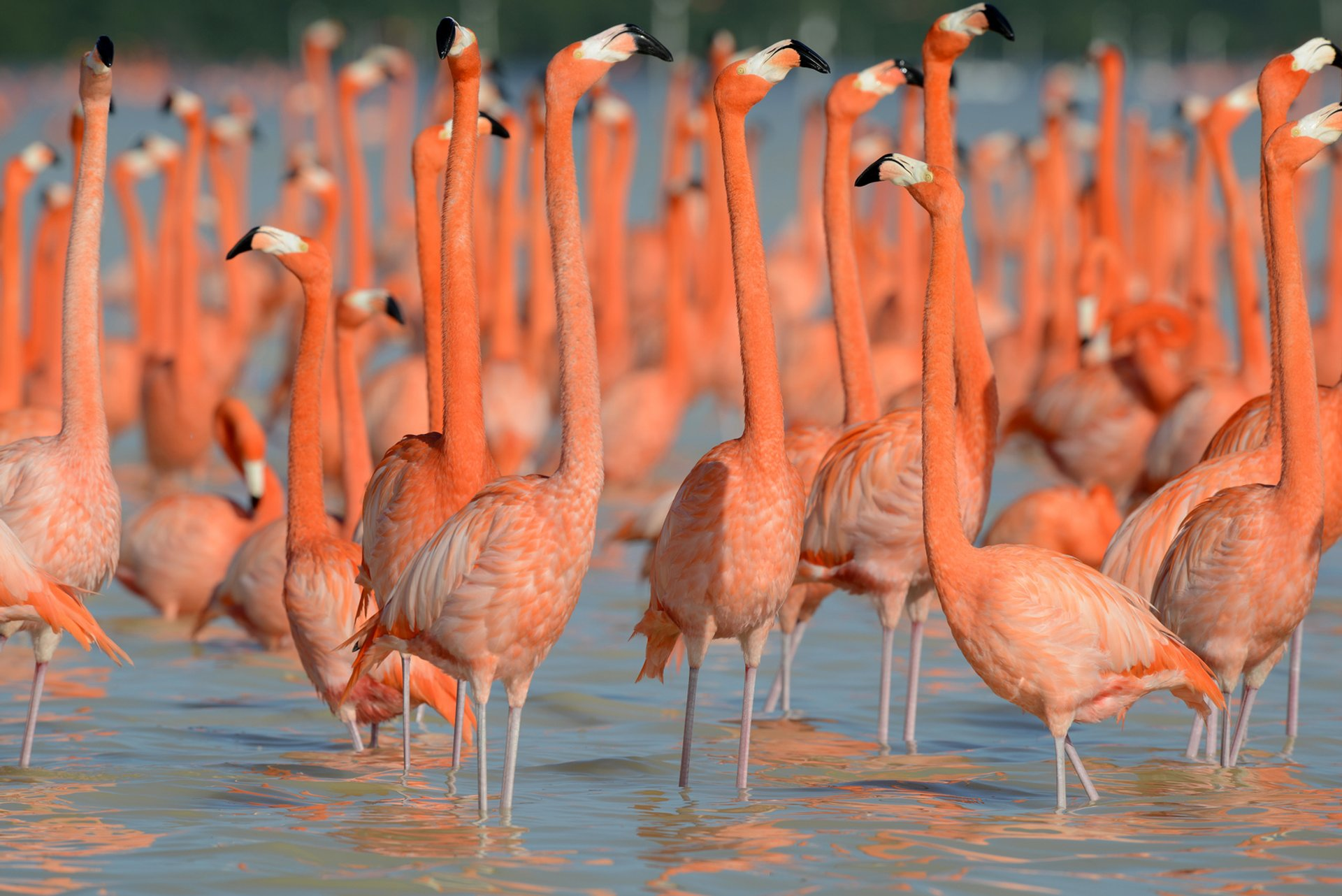 Best time for Flamingos in Mexico 2019