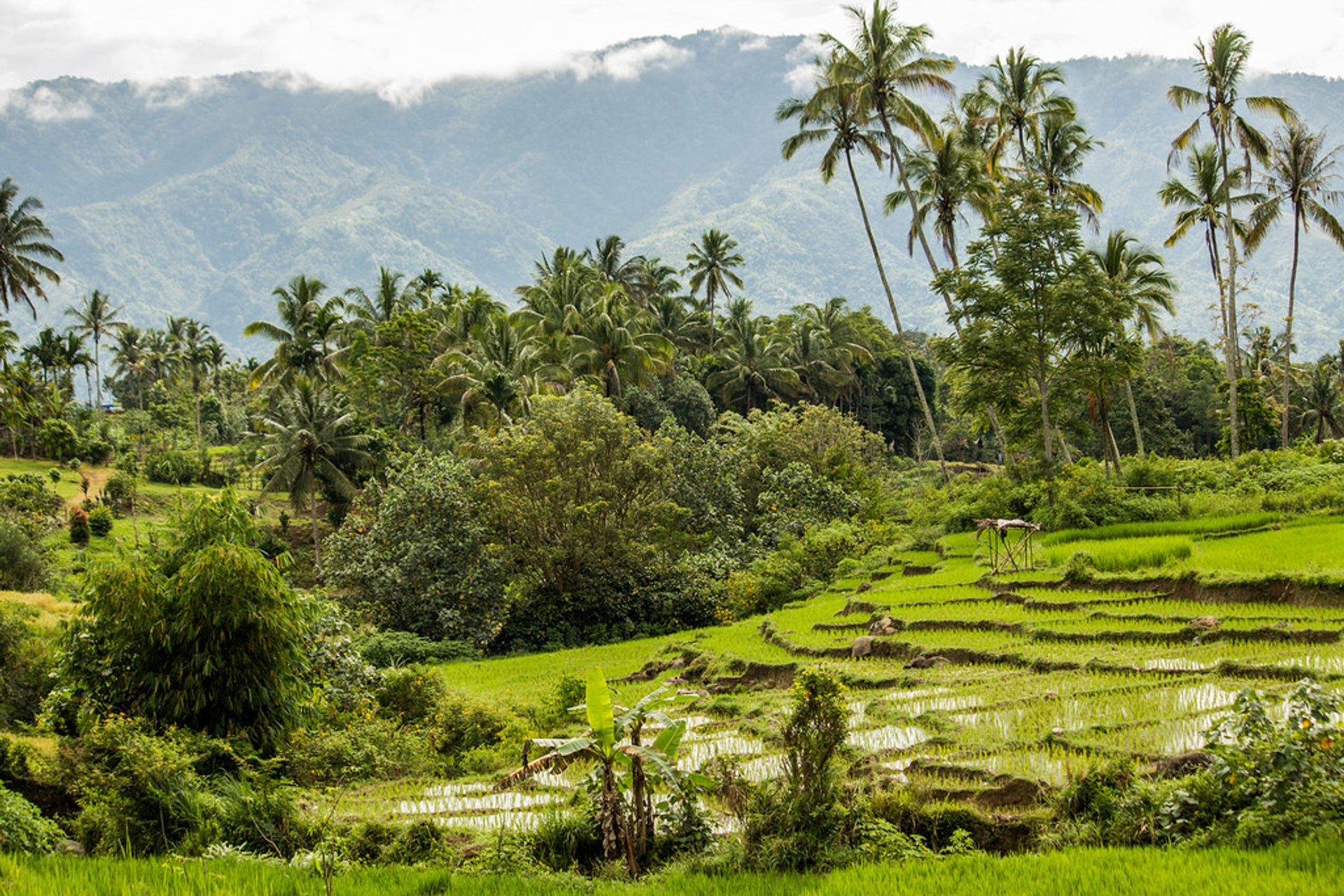Rice Terraces of Kerinci, Sumatra 2020