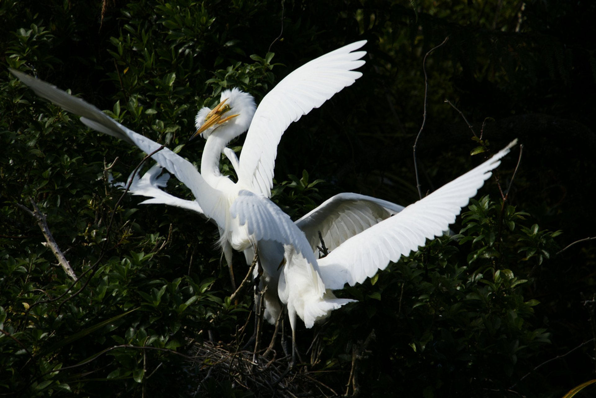 Best time for The White Heron Sanctuary Tours in New Zealand 2020