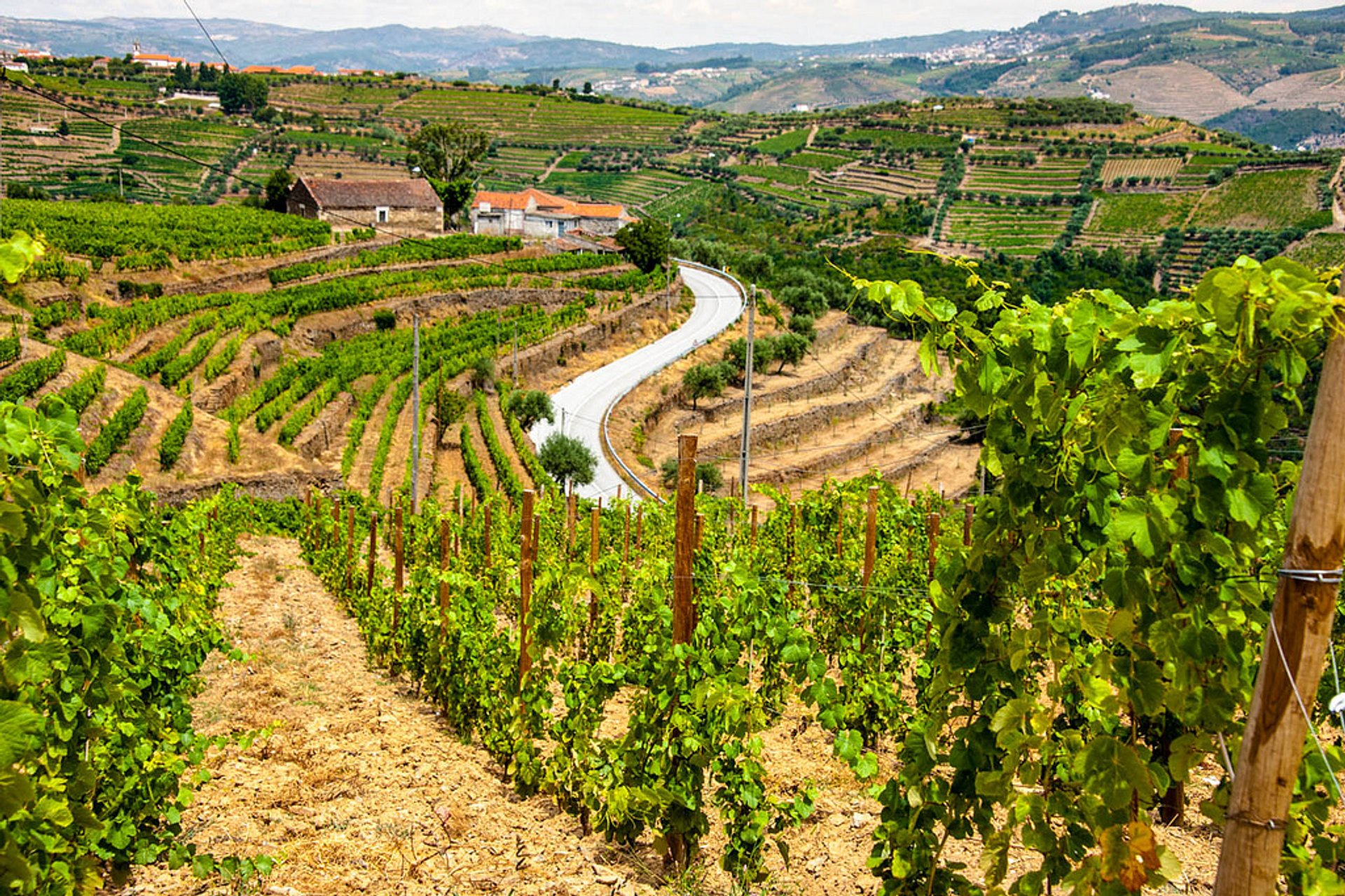 Exploring Douro Valley in Portugal - Best Season 2020