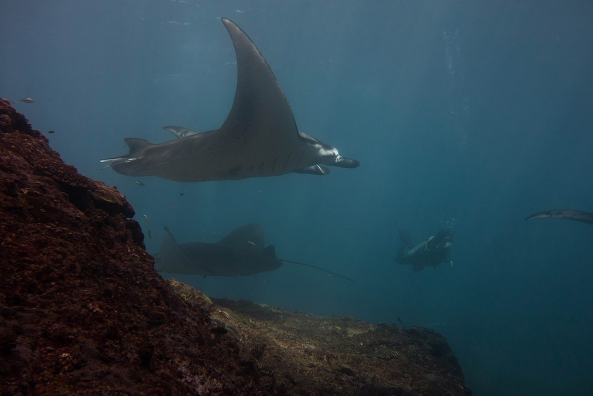 Manta Rays in Bali - Best Season 2020