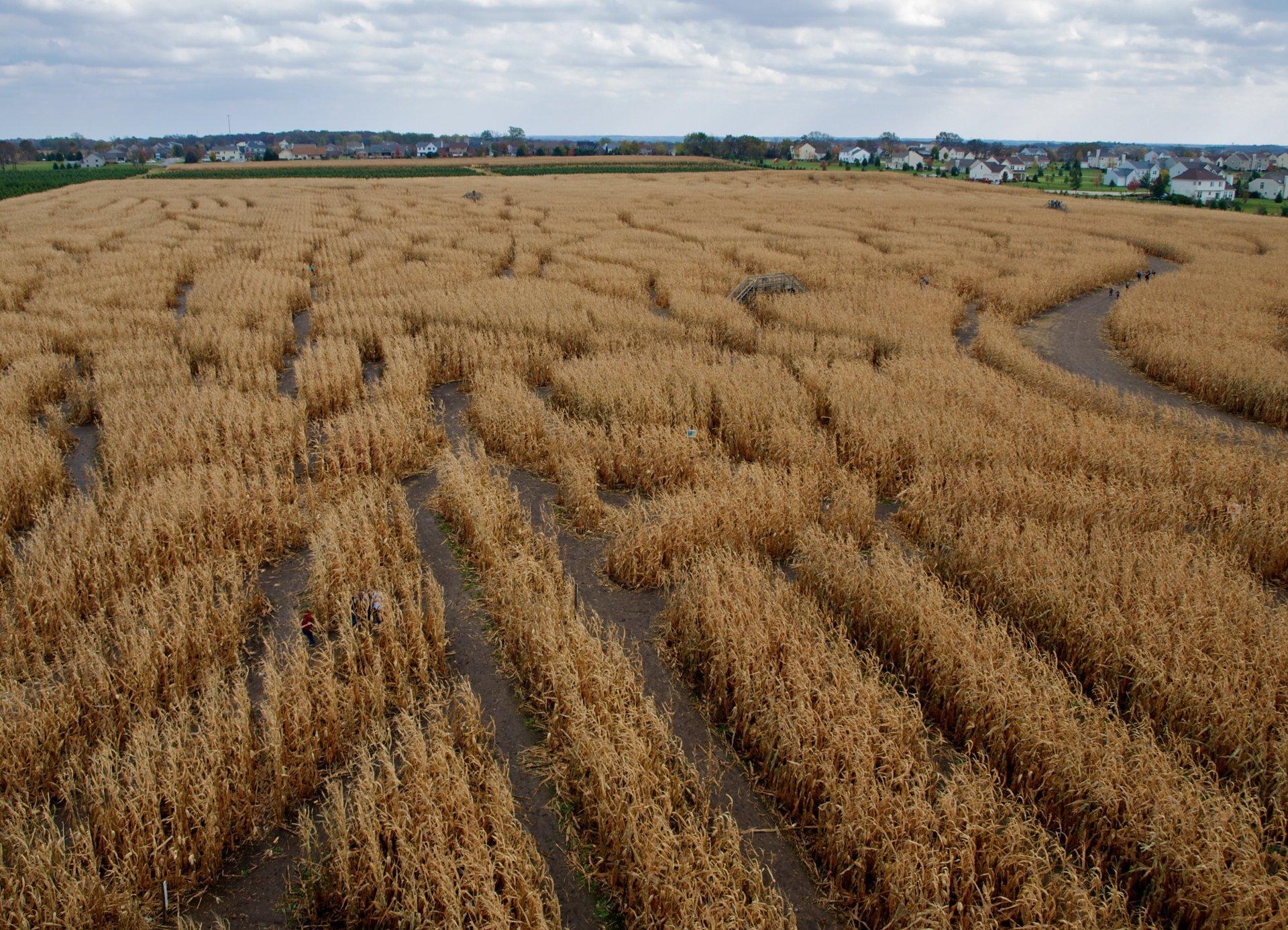 Best time to see Richardson Adventure Farm Corn Maze in Illinois 2020