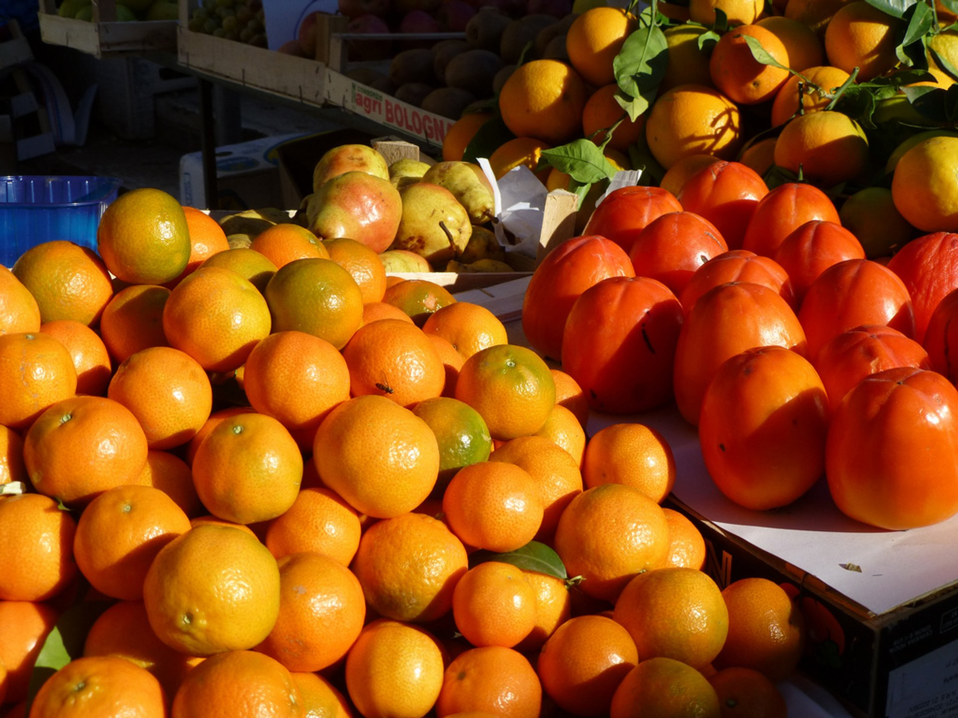 Best time for Tangerine Harvesting Season in Croatia
