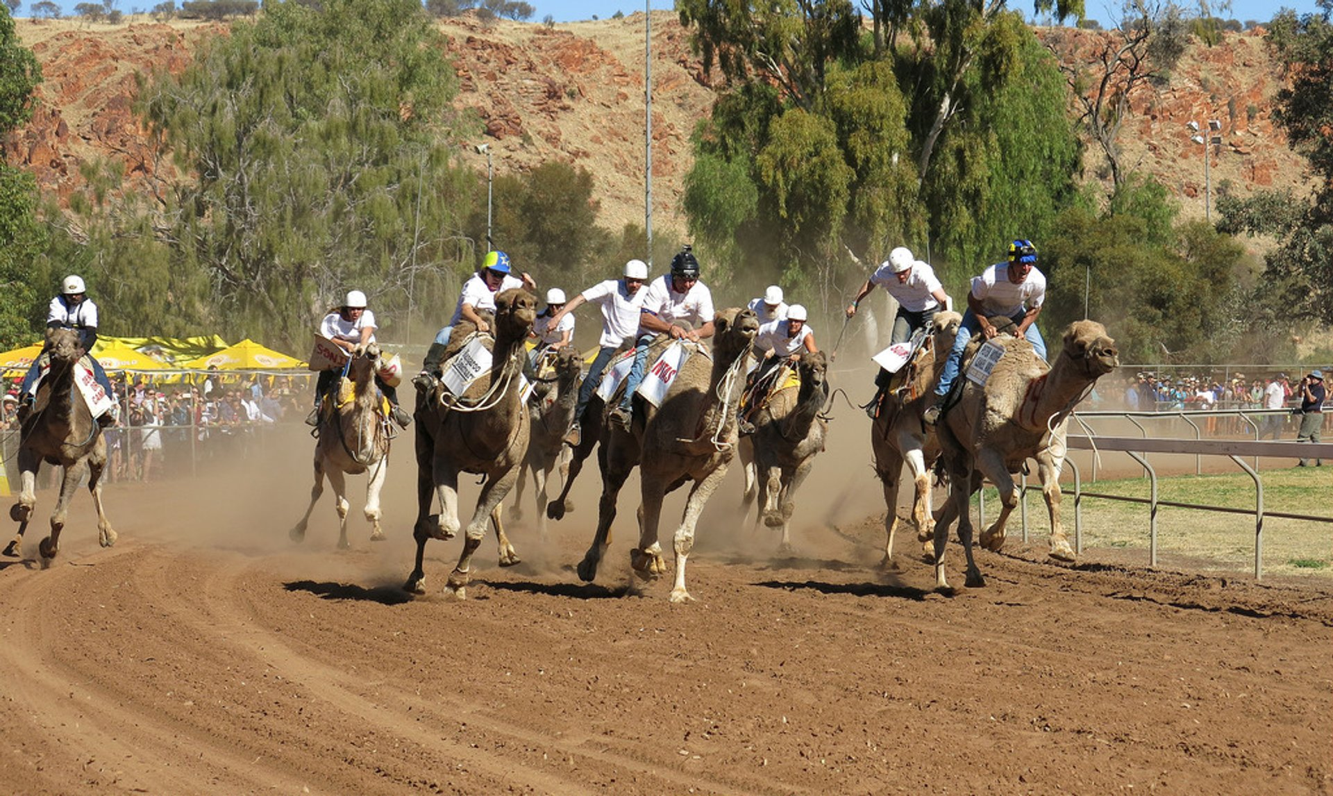 Alice Springs Camel Cup in Northern Territory 2020 - Best Time
