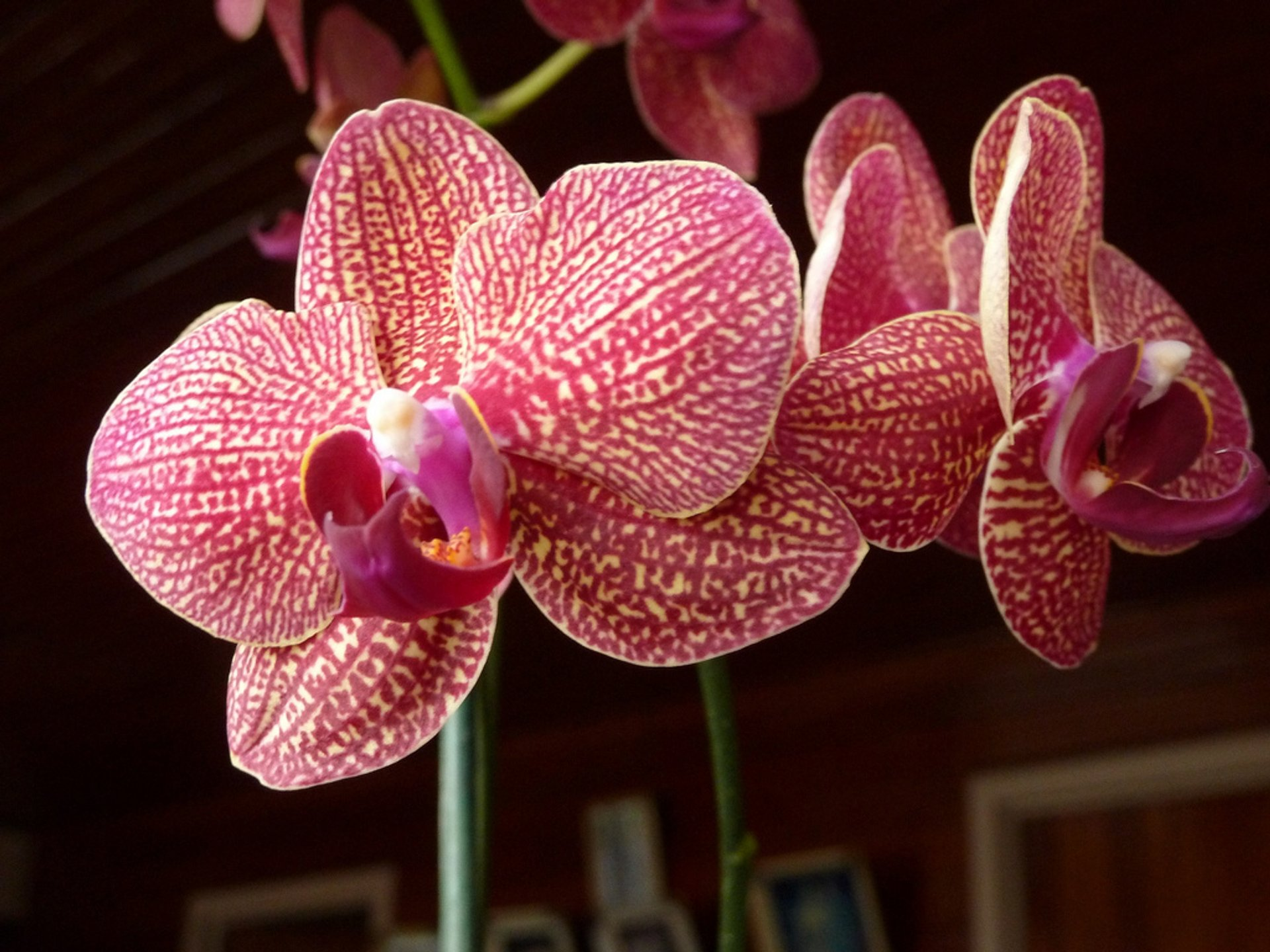 Orchids in Costa Rica 2020 - Best Time