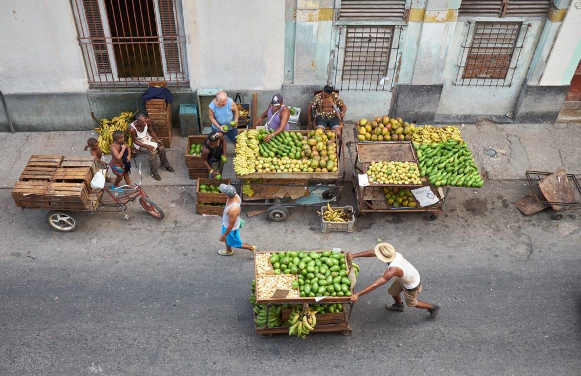 Avocado stalls in Havana 2020