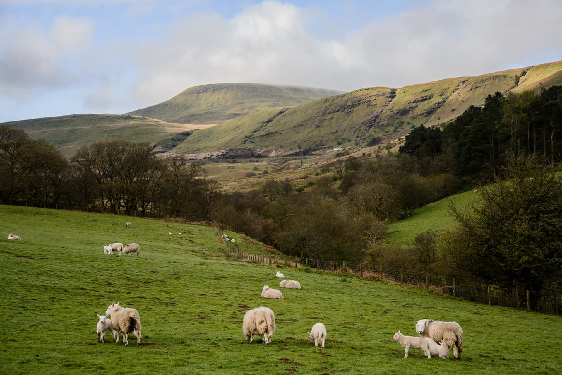 Best time for Sheep Trekking in the Brecon Beacons in Wales 2019