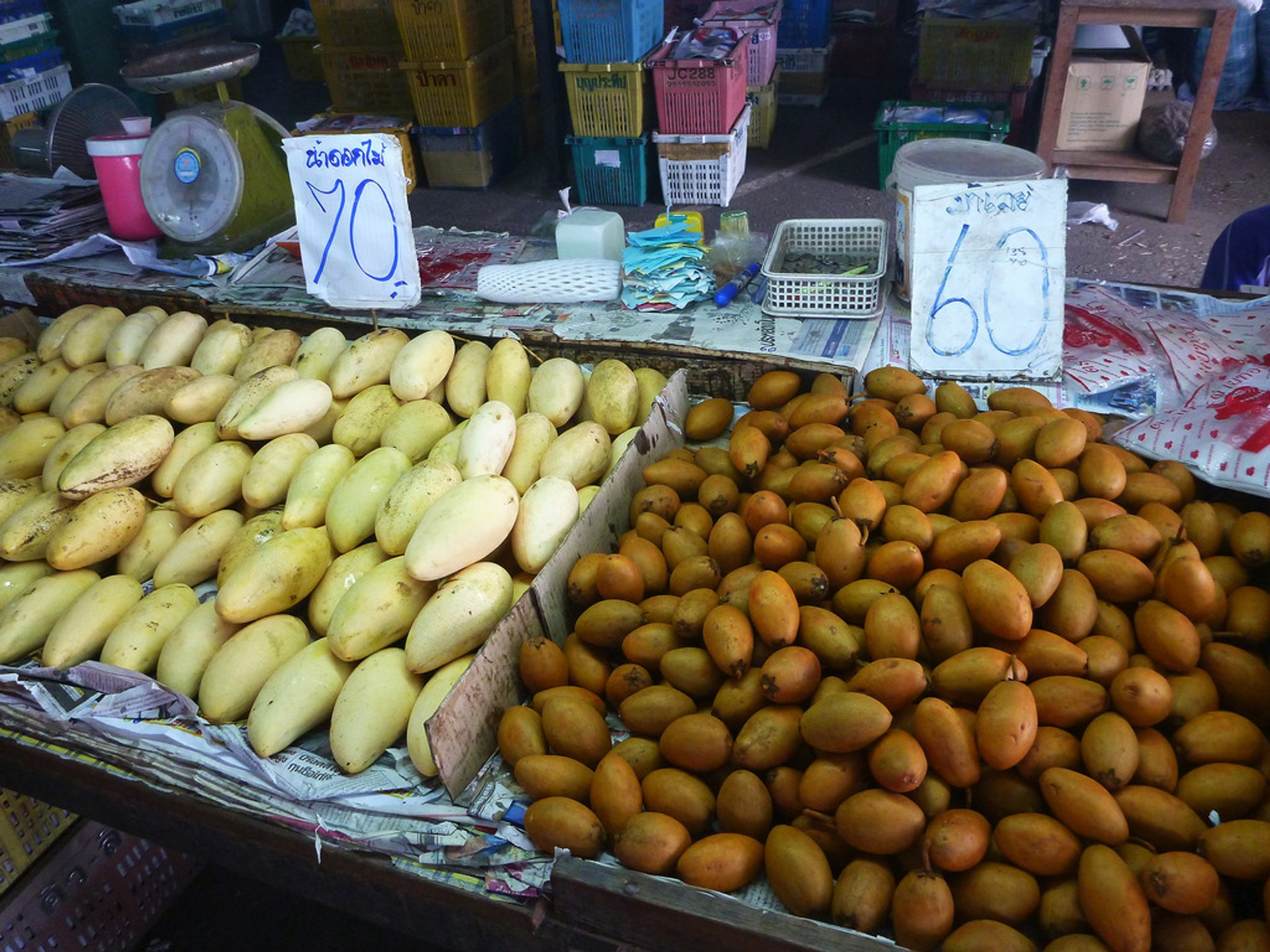 Mango and sapodilla 2019