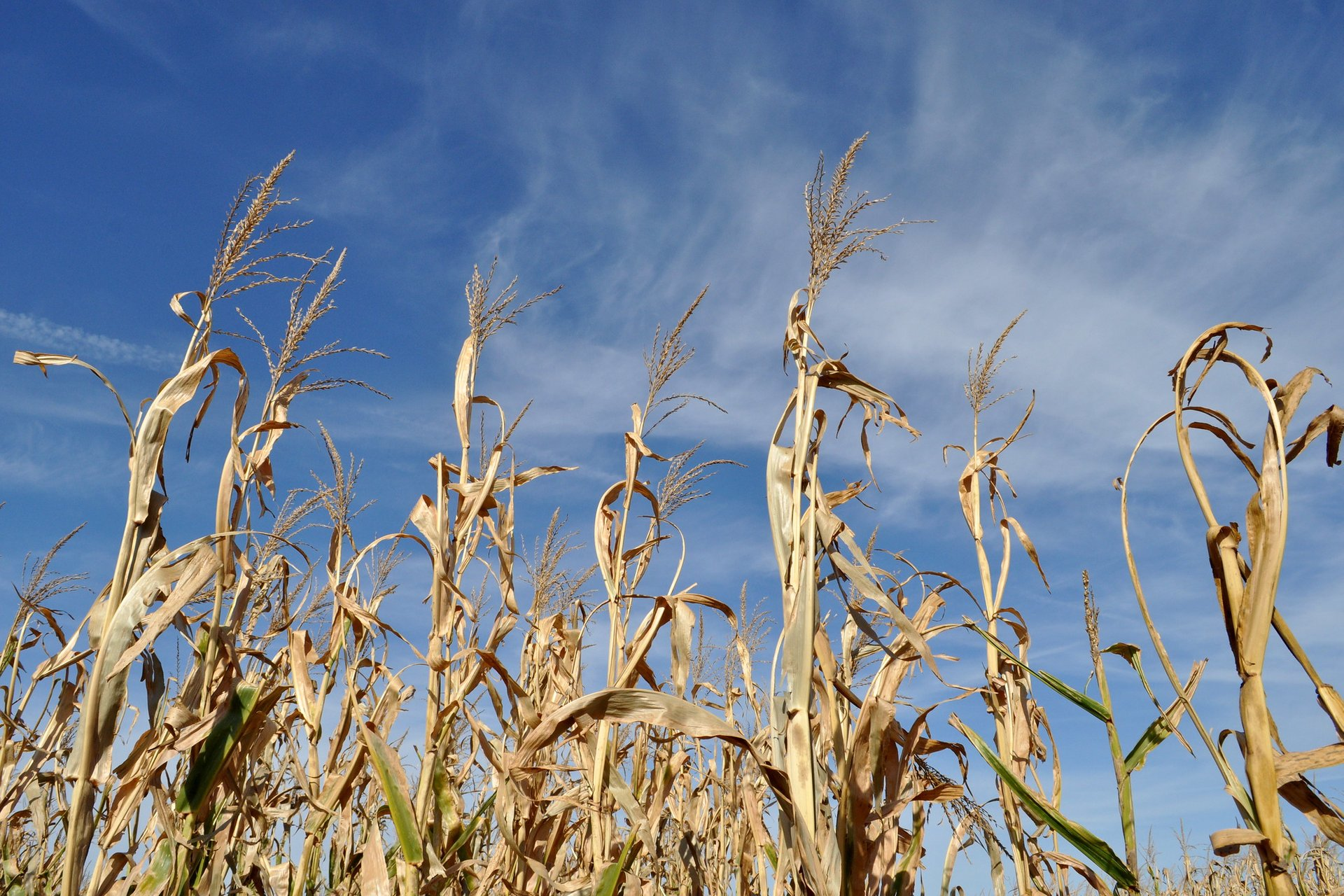 Best time for Richardson Adventure Farm Corn Maze in Illinois 2020