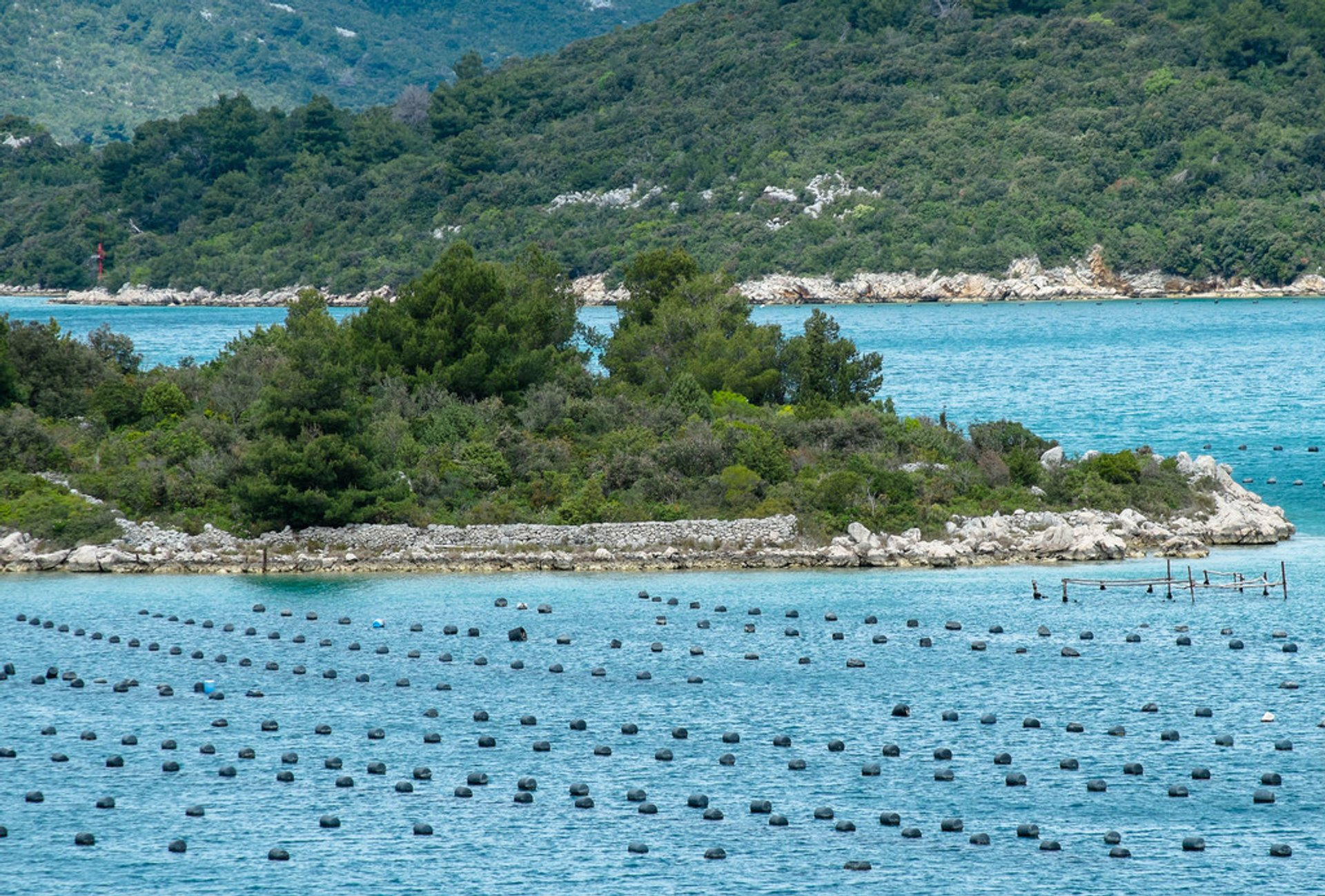 Oysters Season in Croatia - Best Season 2020