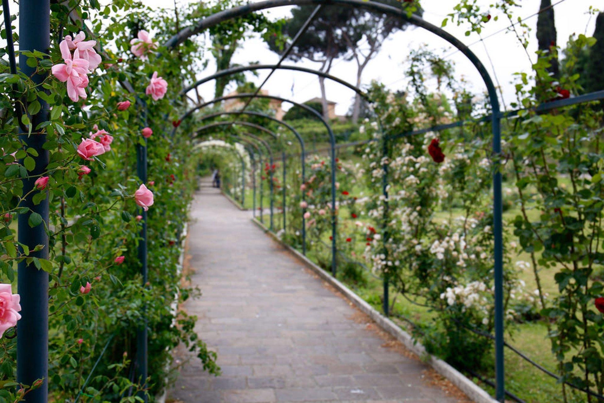 Rose Gardens in Italy - Best Season 2020