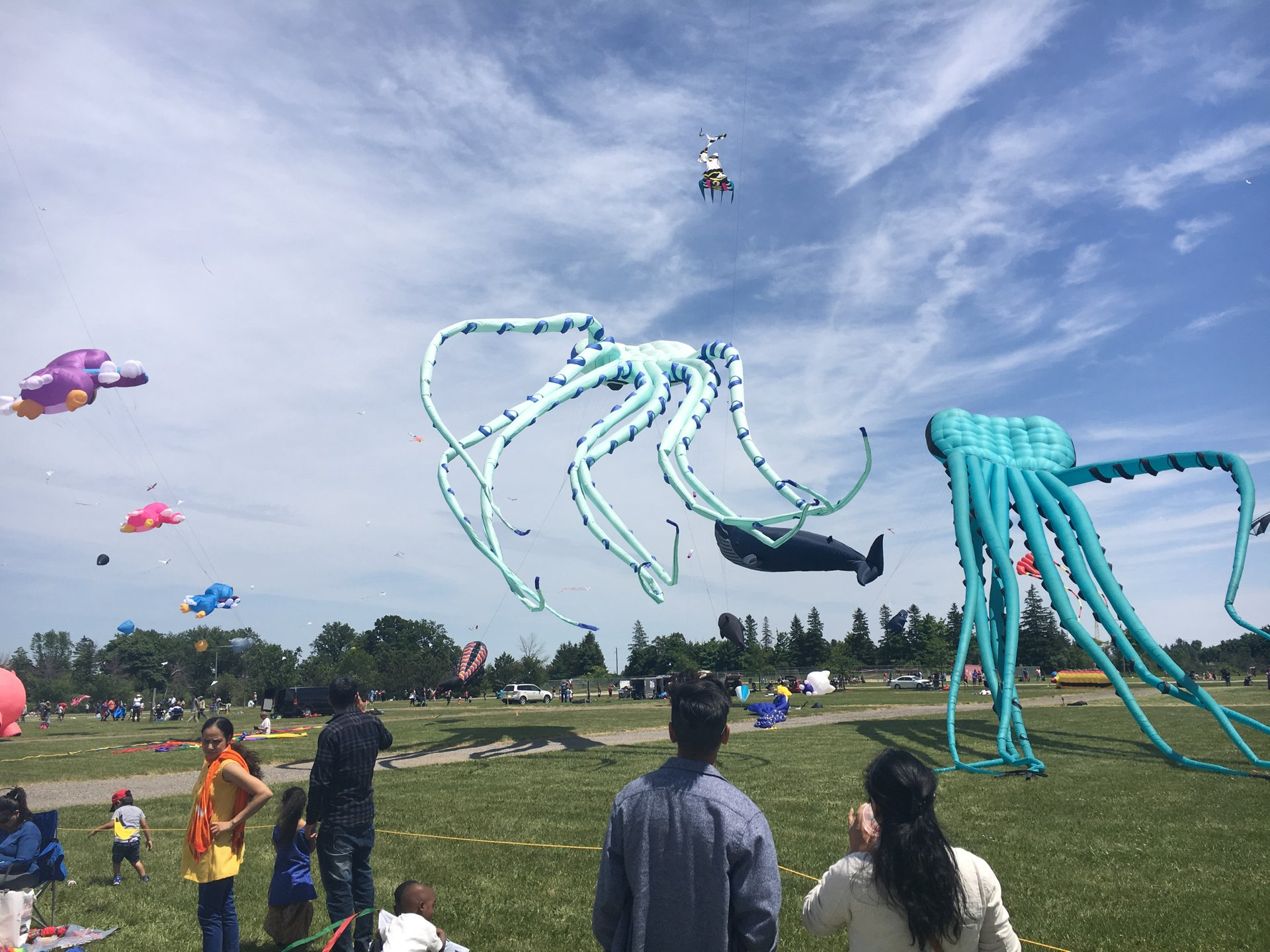 Brampton Kite Fest in Toronto 2020 - Best Time
