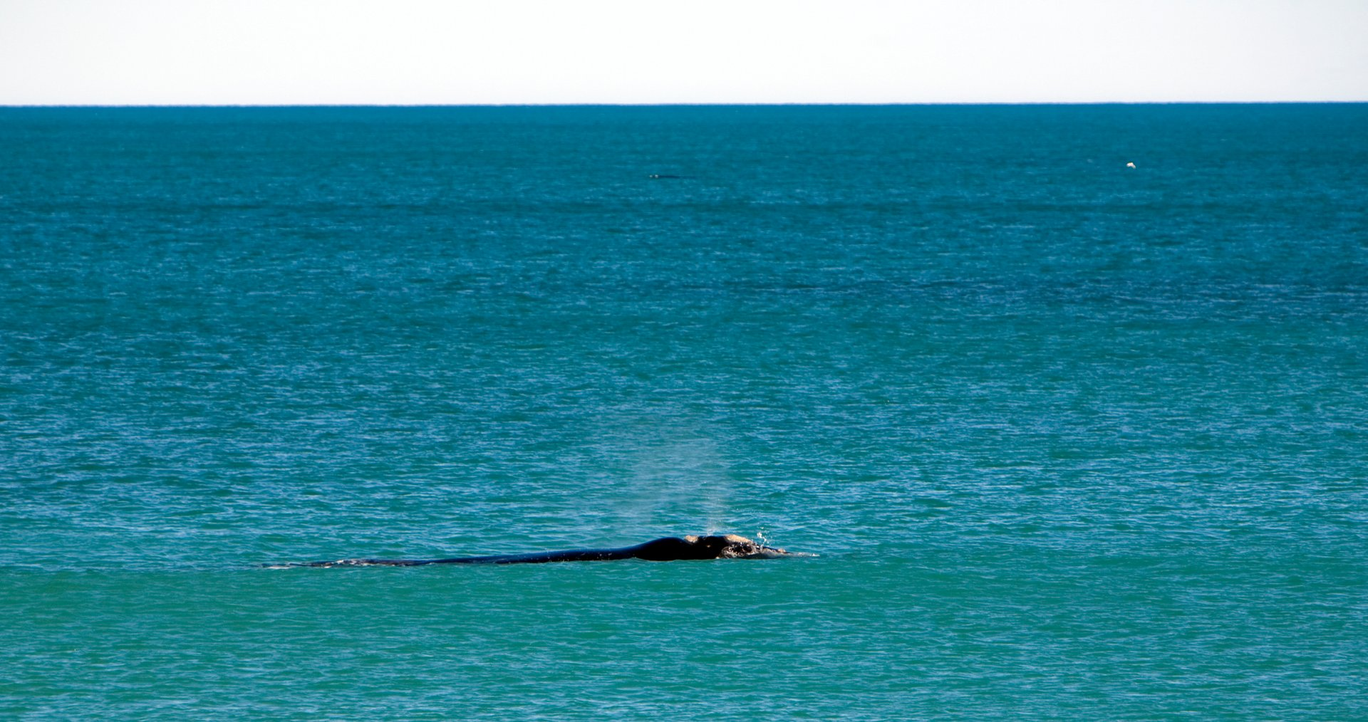 Whale Watching in South Australia 2020 - Best Time