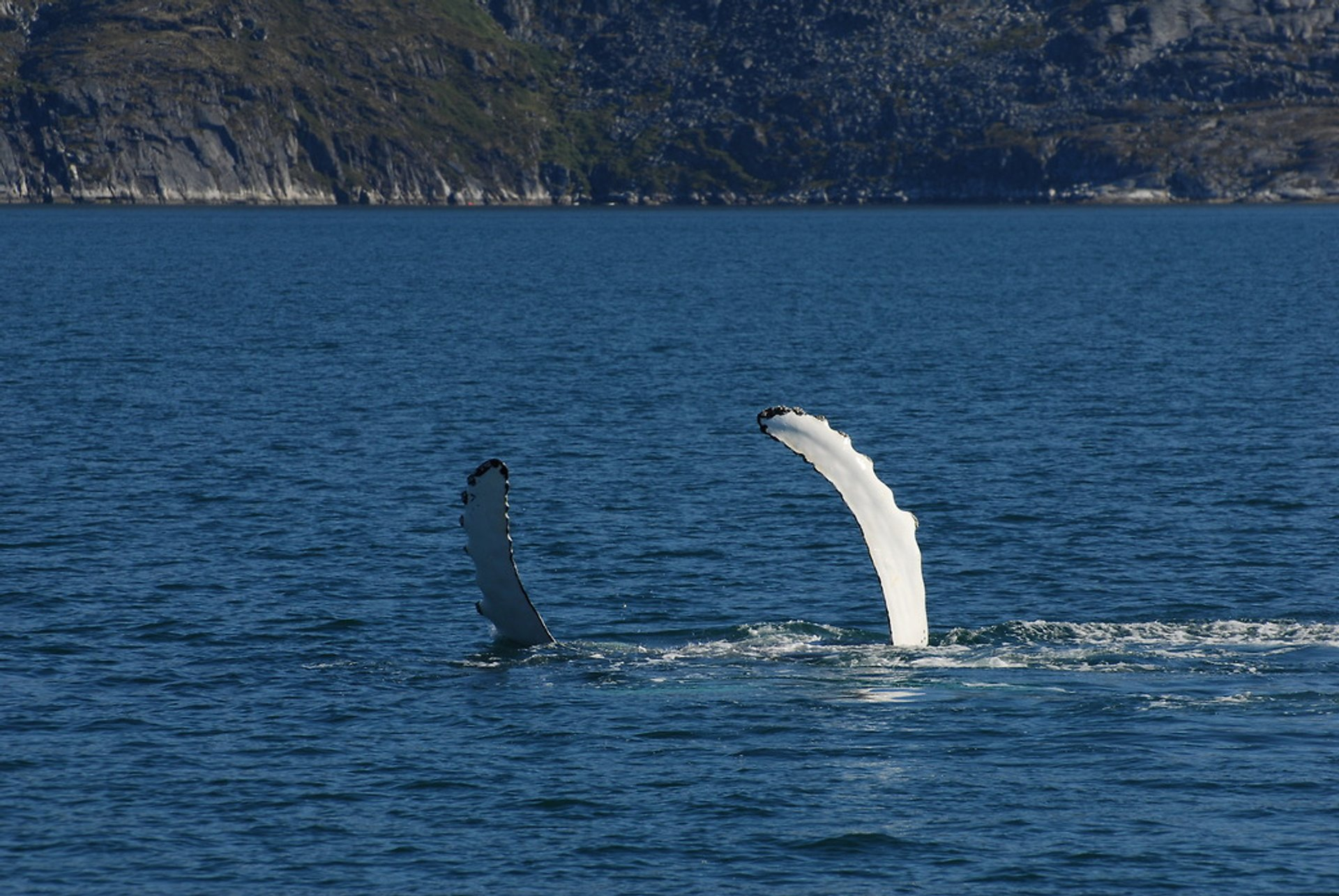 Whale Watching in Greenland - Best Season 2020