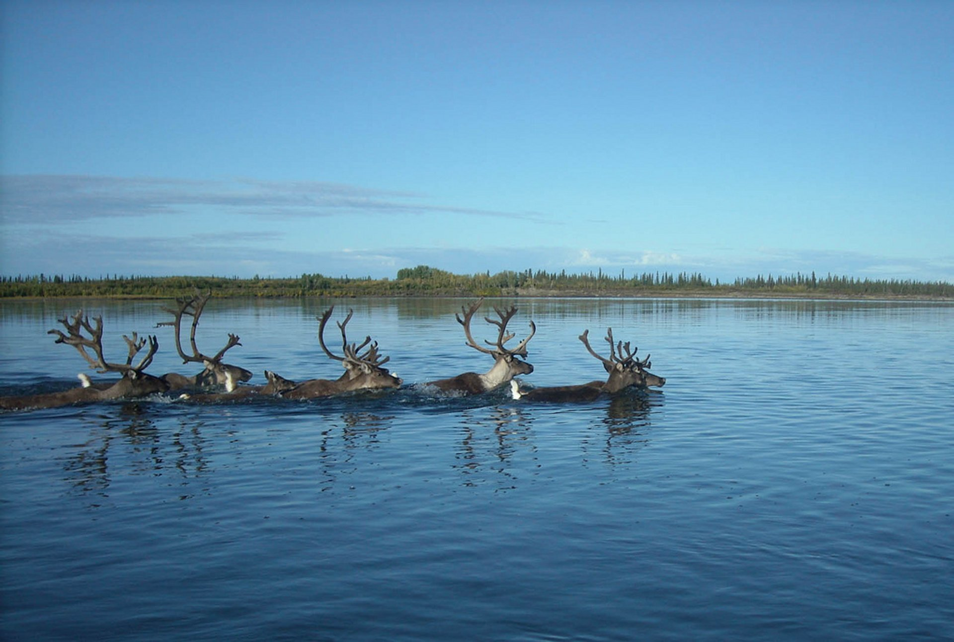 Crossing the Kobuk river in Kobuk Valley National Park 2020