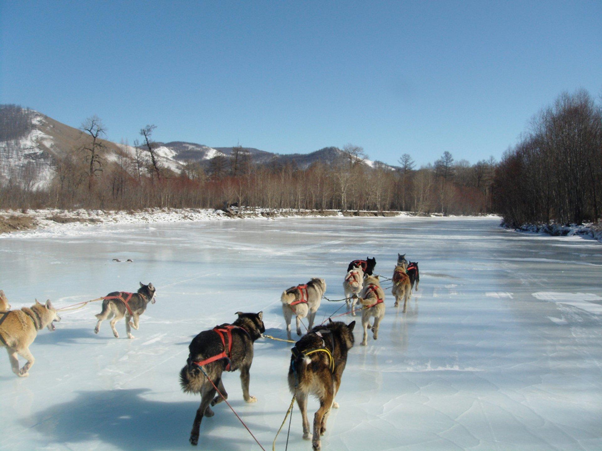 Dog Sledding in Mongolia 2019 - Best Time