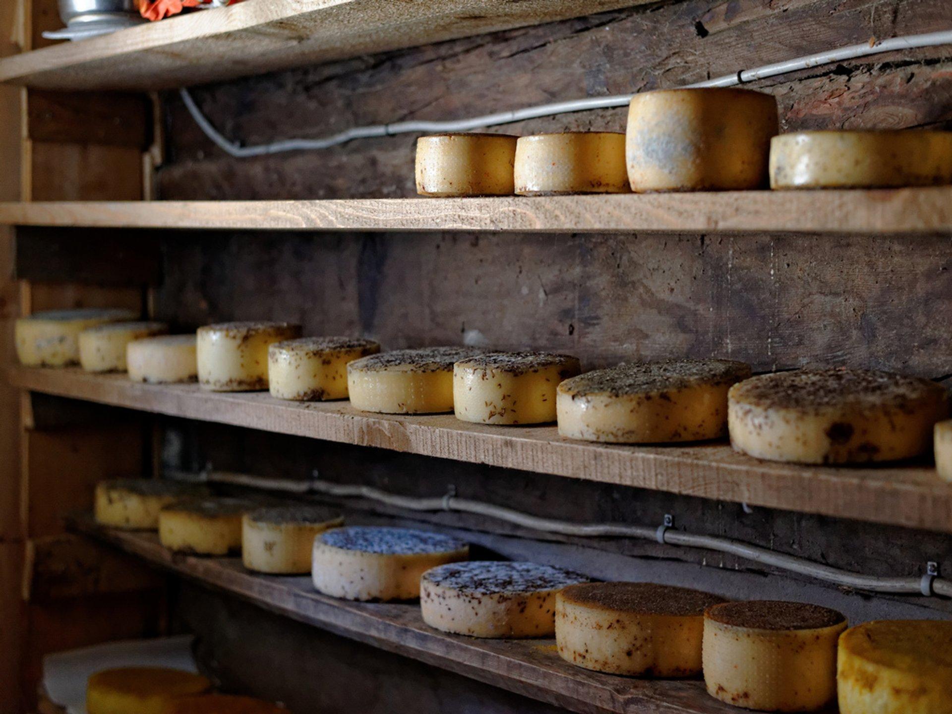 Cheese in Switzerland 2020 - Best Time