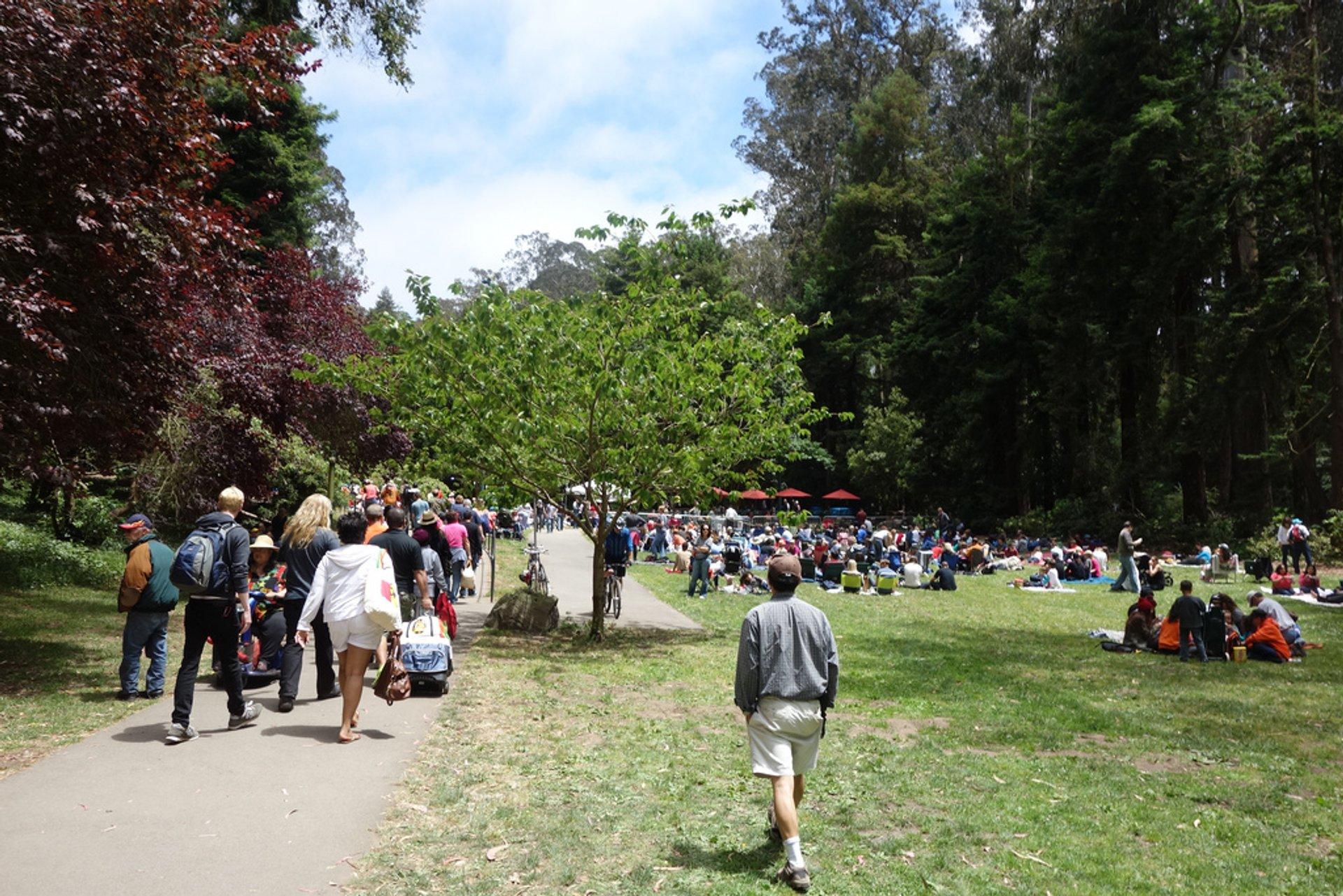 Stern Grove Festival in San Francisco - Best Season 2020