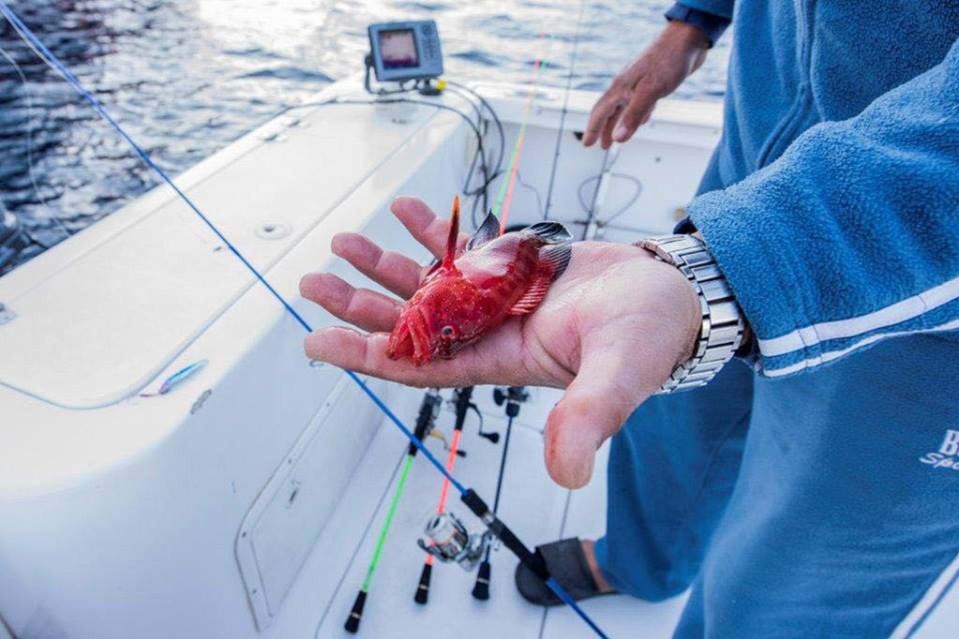 Fishing in Jordan 2019 - Best Time