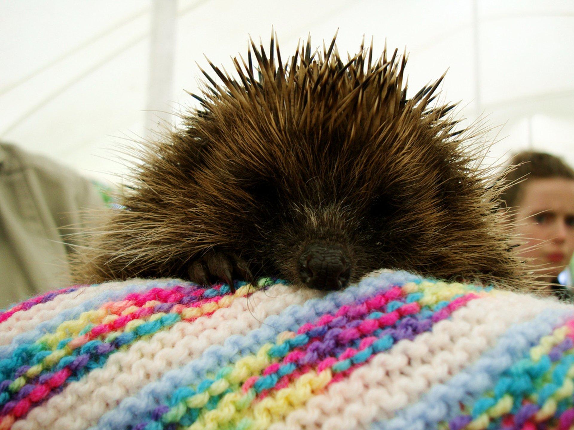 Hedgehog Rescue in Wales - Best Season