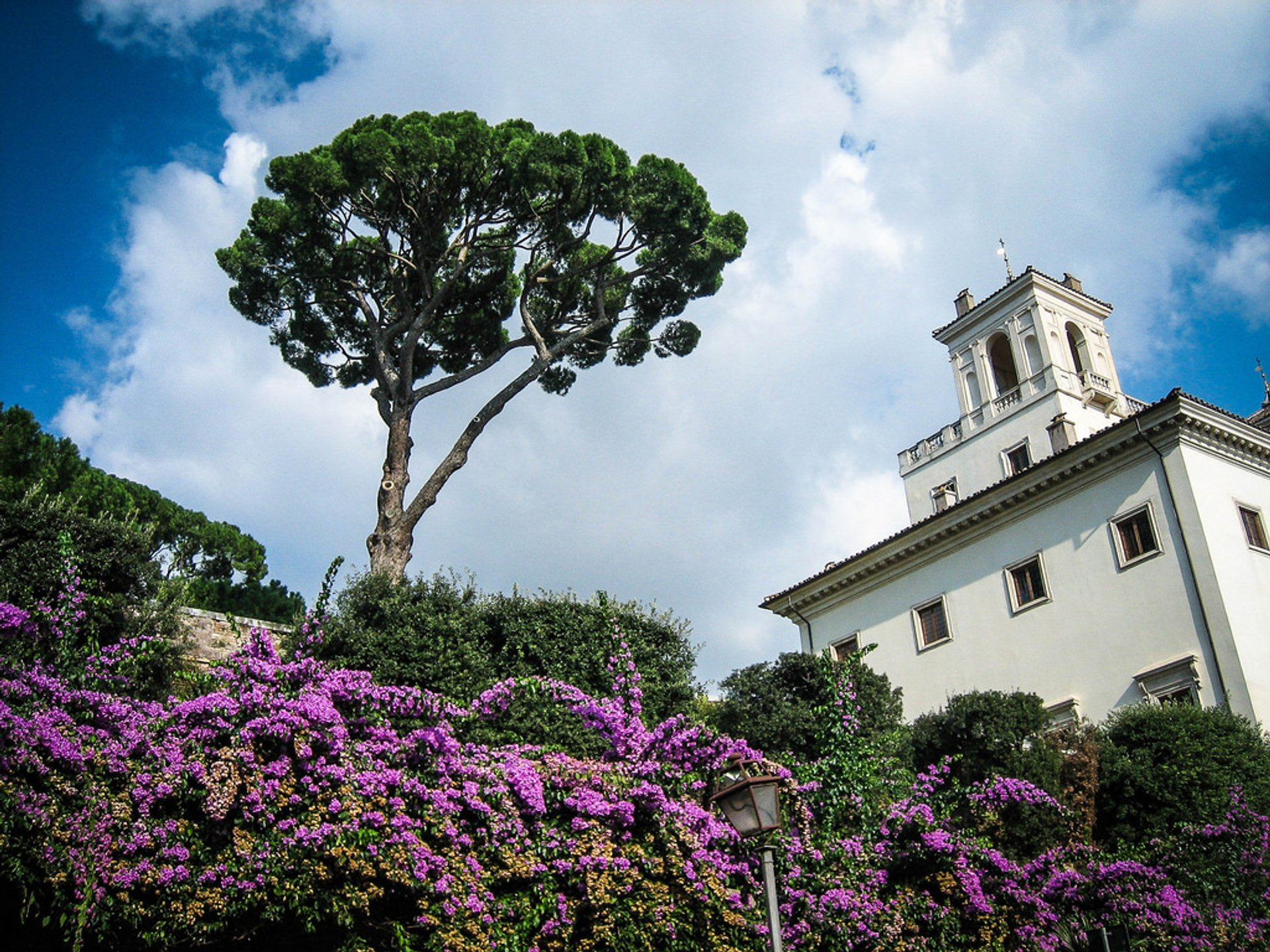 Best time for Bougainvillea Bloom in Rome 2019