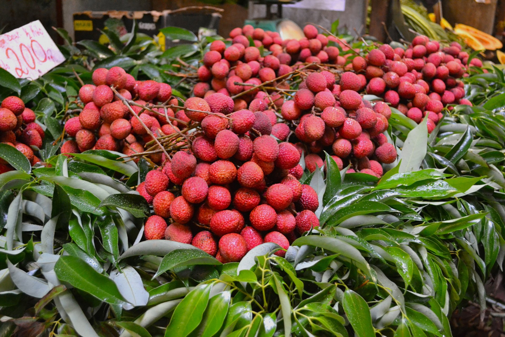 Lychees in Mauritius 2019 - Best Time