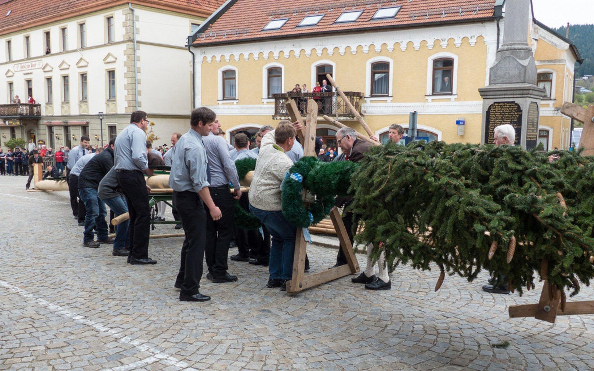 Maibaumaufstellen (May Day Festival) in Bavaria - Best Season 2020