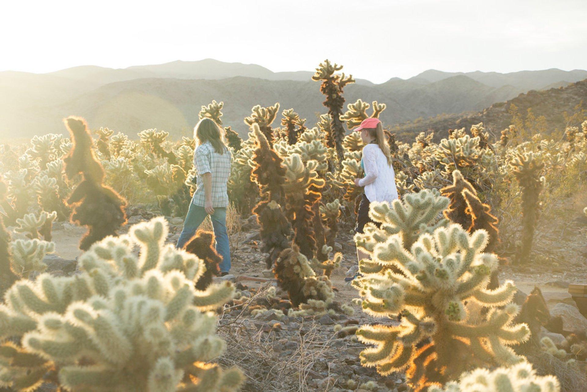Cactus Blooming in Los Angeles 2020 - Best Time