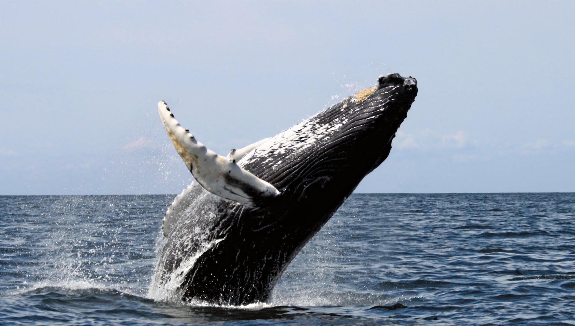Whale Watching in Madagascar - Best Time